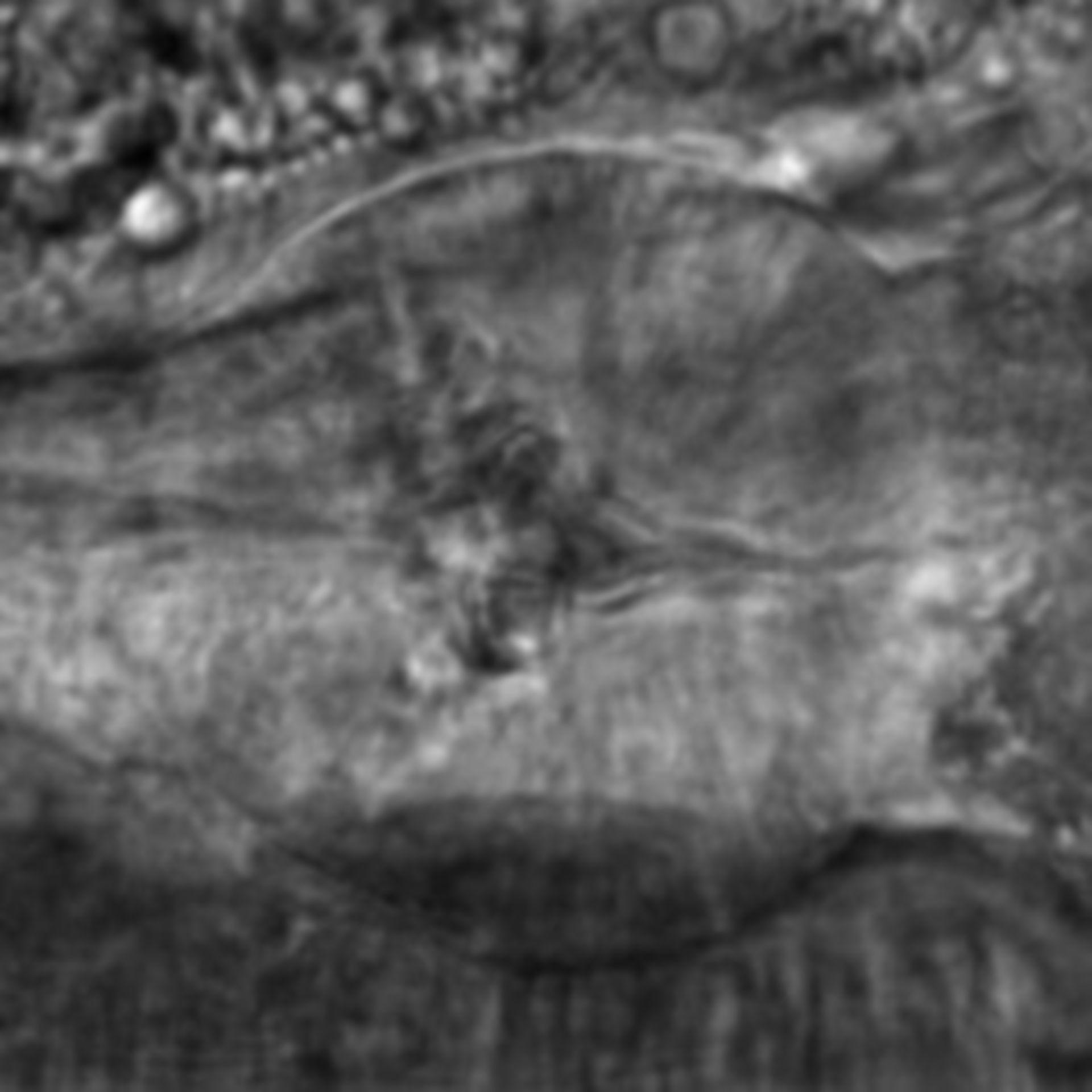Caenorhabditis elegans - CIL:2137