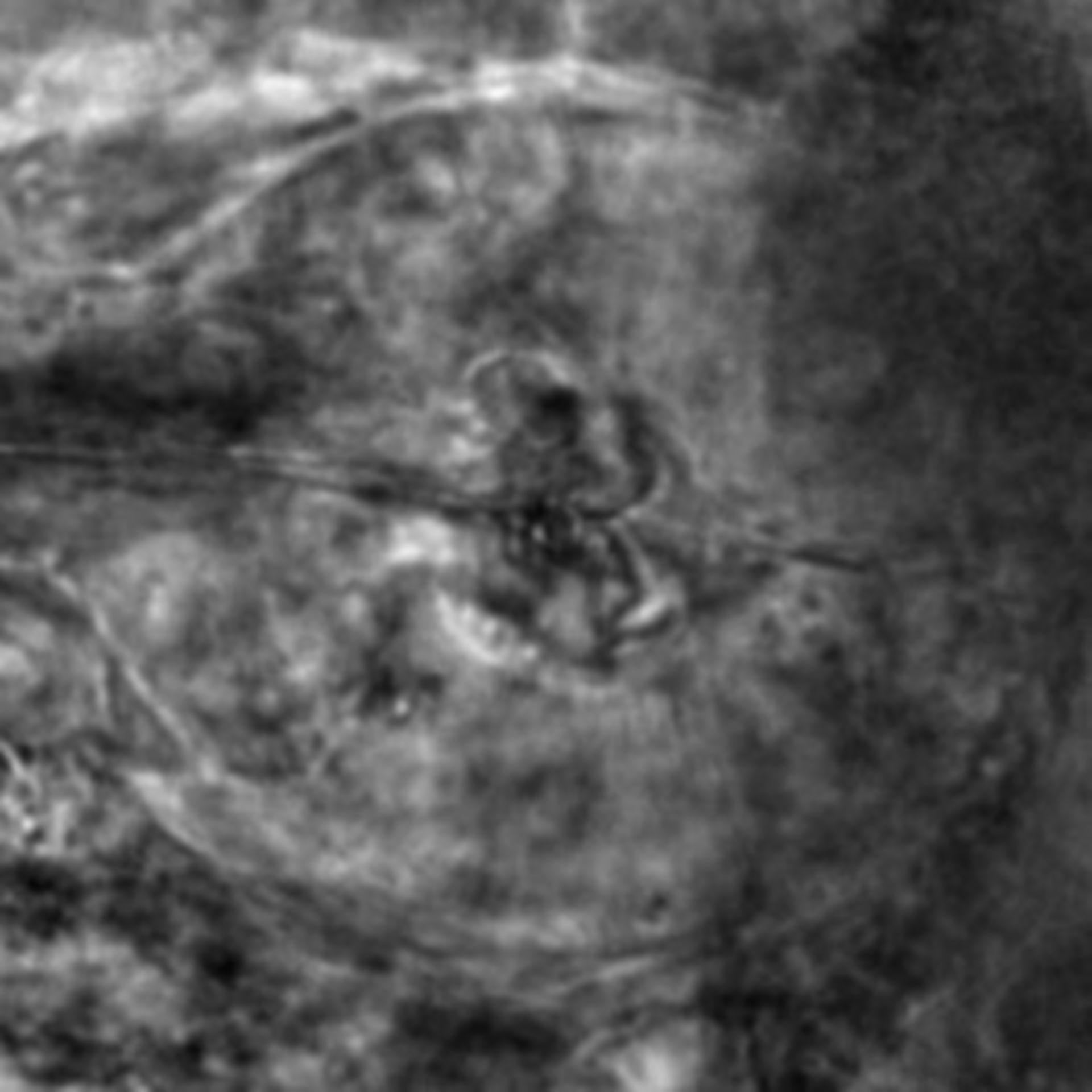 Caenorhabditis elegans - CIL:2567