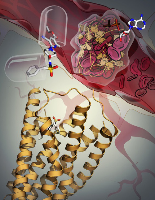 Kristallstruktur und Funktion des P2Y12-Rezeptors: Die Rezeptorstruktur ist als gelbes Band dargestellt. (c) Grafik: Katya Kadyshevskaya/Stevens Laboratory/The Scripps Research Institute