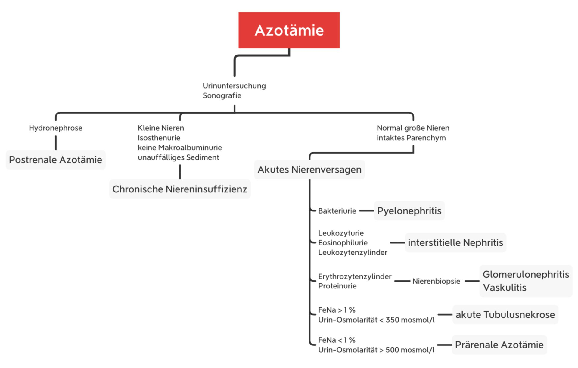 Möglicher Algorithmus bei einer Azotämie