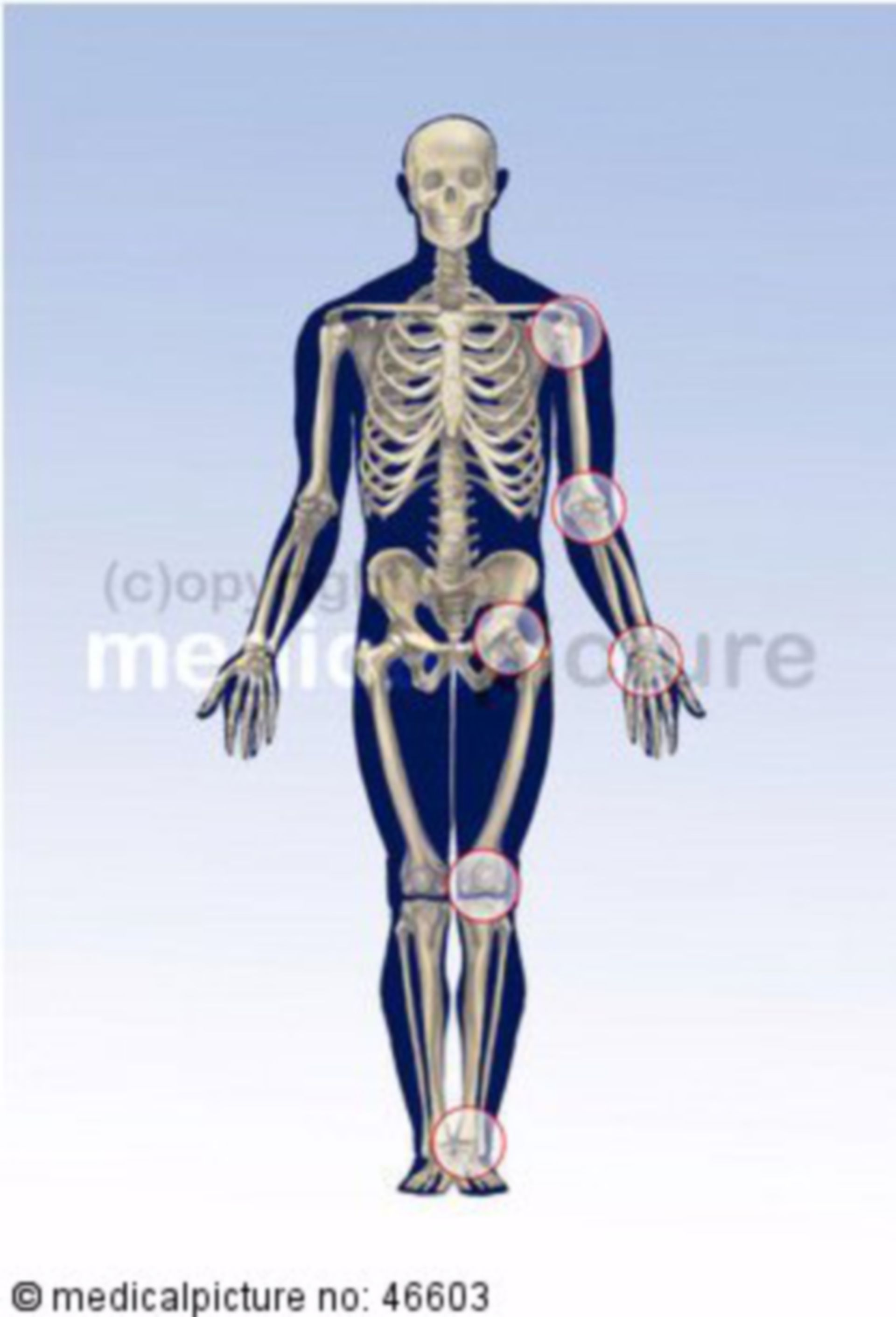 Human skeleton with emphasis on large joints