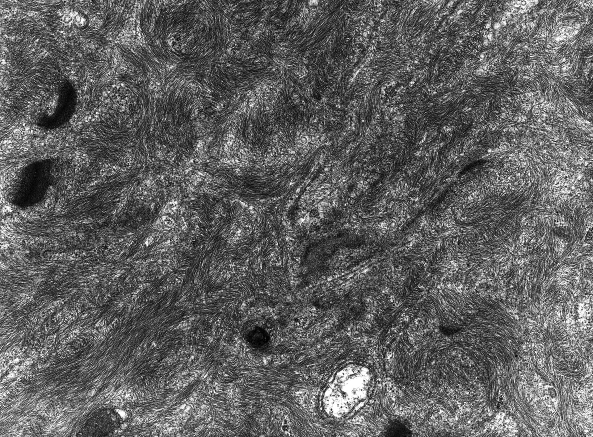 Rana catesbeiana (Plasma membrane) - CIL:10441