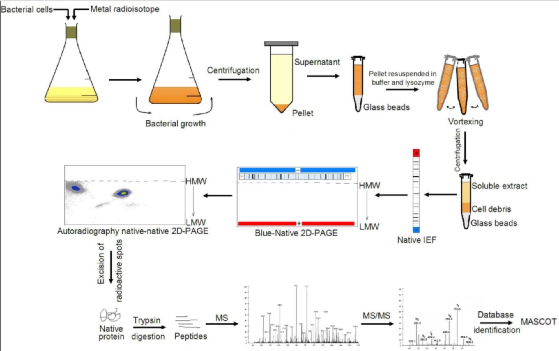 Protein Methylation Analysis