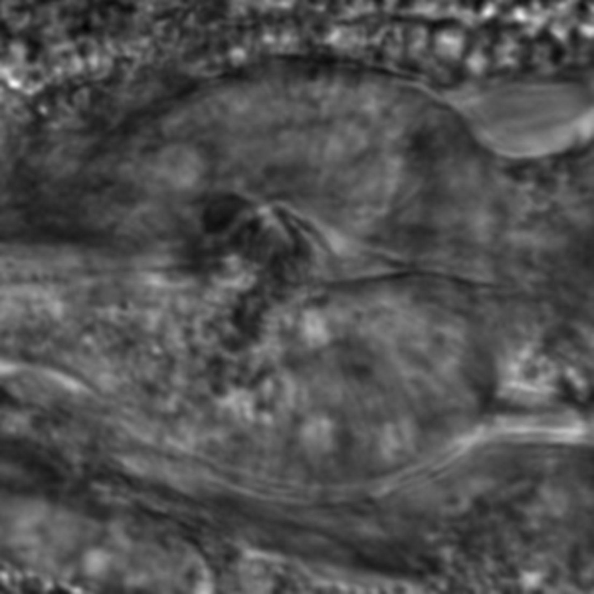 Caenorhabditis elegans - CIL:2122