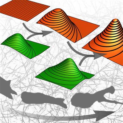 Scheinbar chaotische Bewegungen von Krebszellen ergeben plötzlich Muster, beobachteten FAU-Forscher. © FAU/Claus Metzner