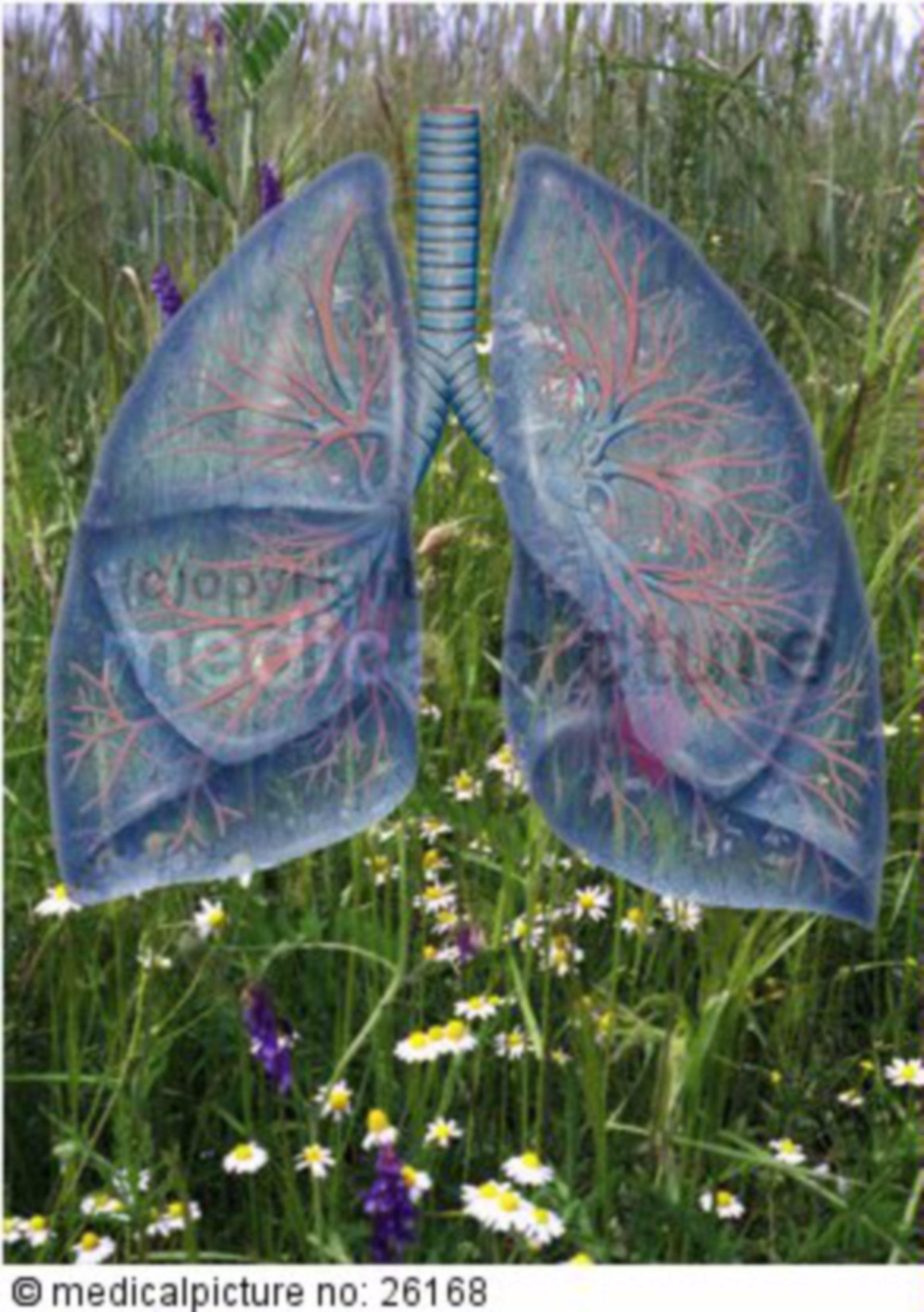 Lunge vor Wiese