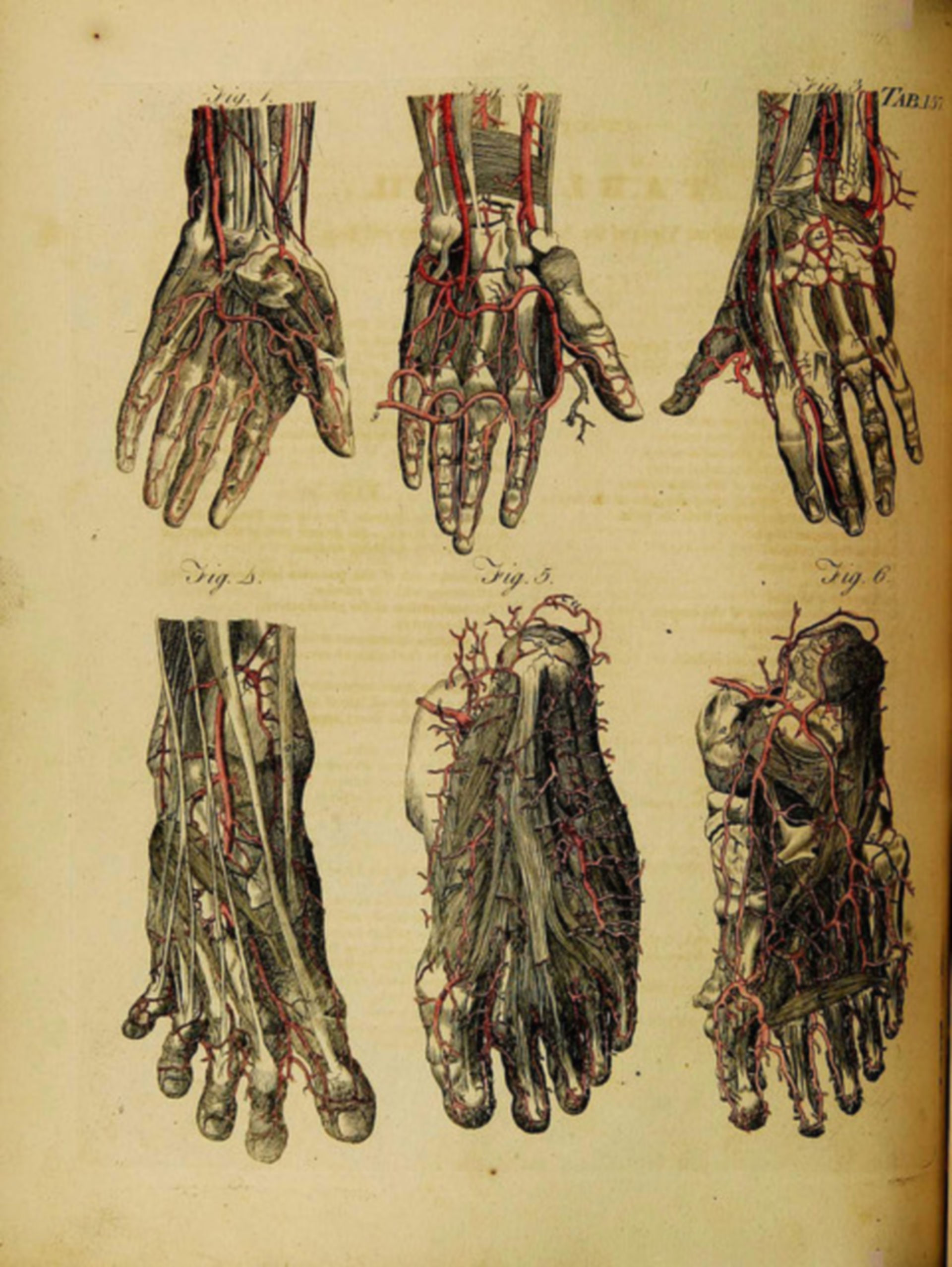 Übersicht über die Durchblutung der Hände