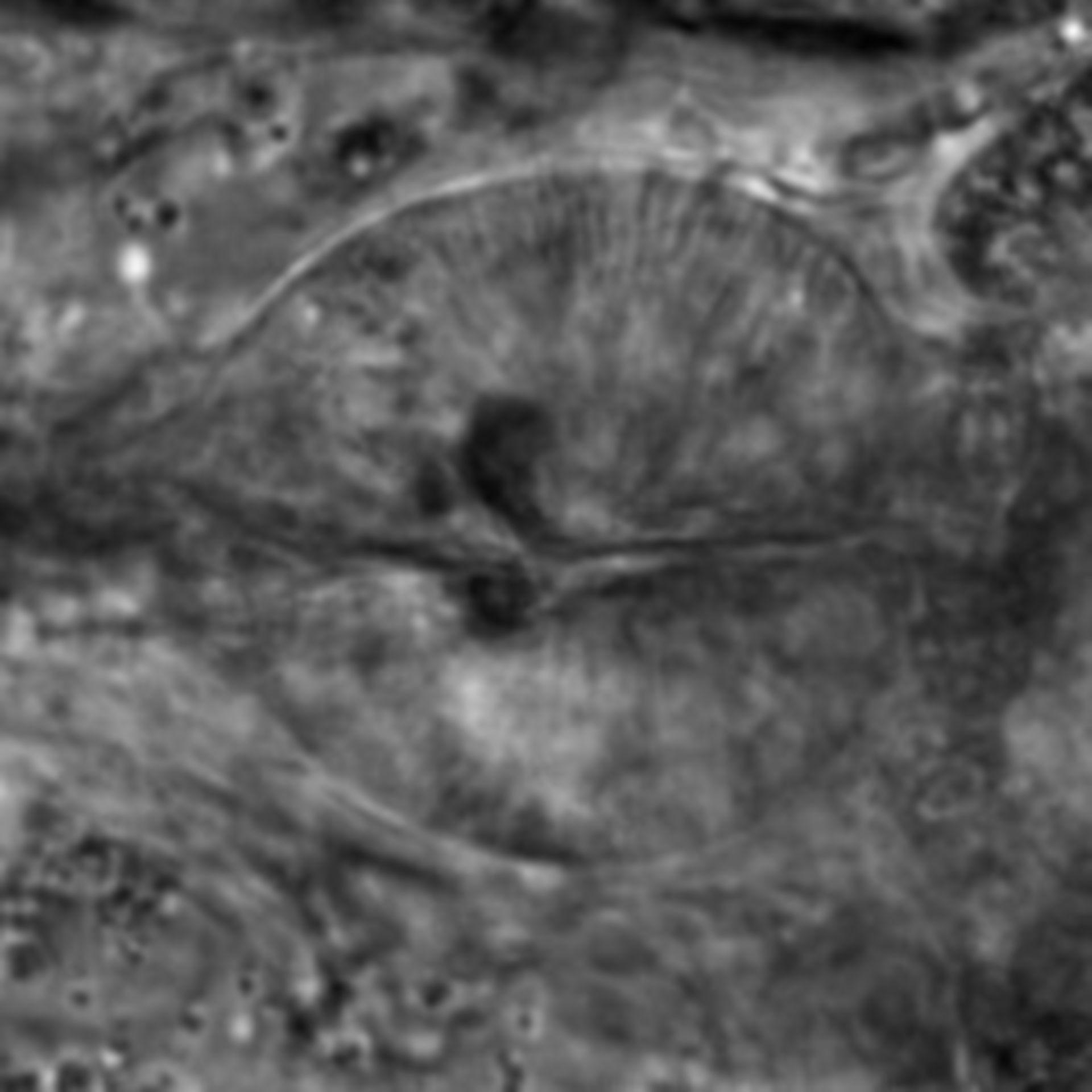Caenorhabditis elegans - CIL:1693