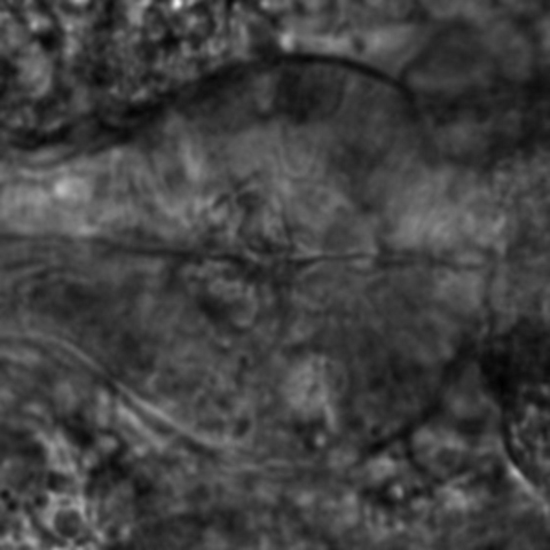 Caenorhabditis elegans - CIL:2150