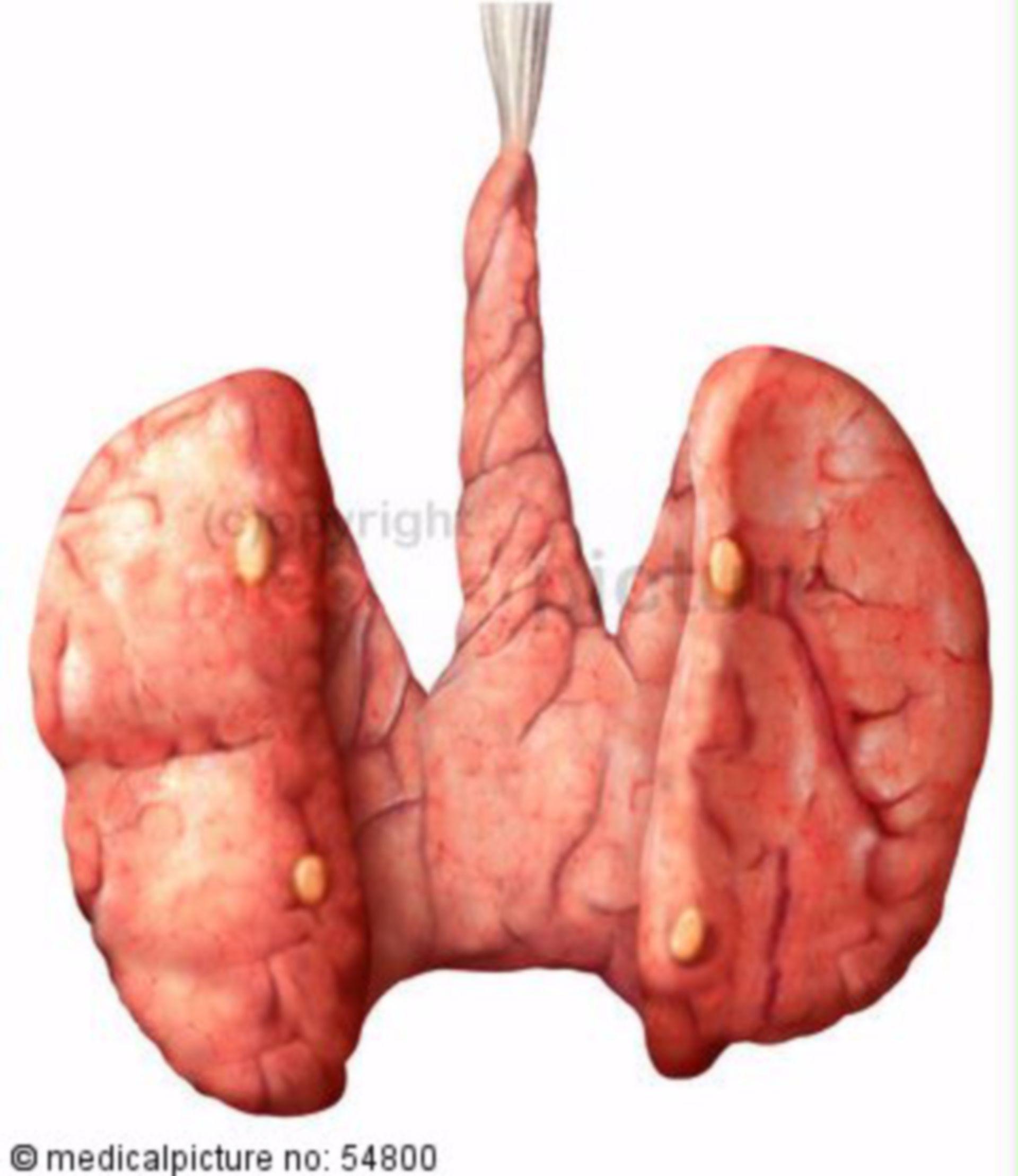 Thyroid and parathyroids