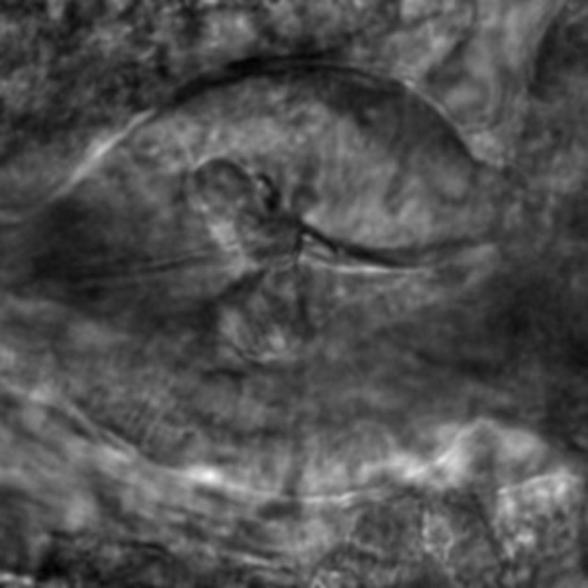 Caenorhabditis elegans - CIL:2720