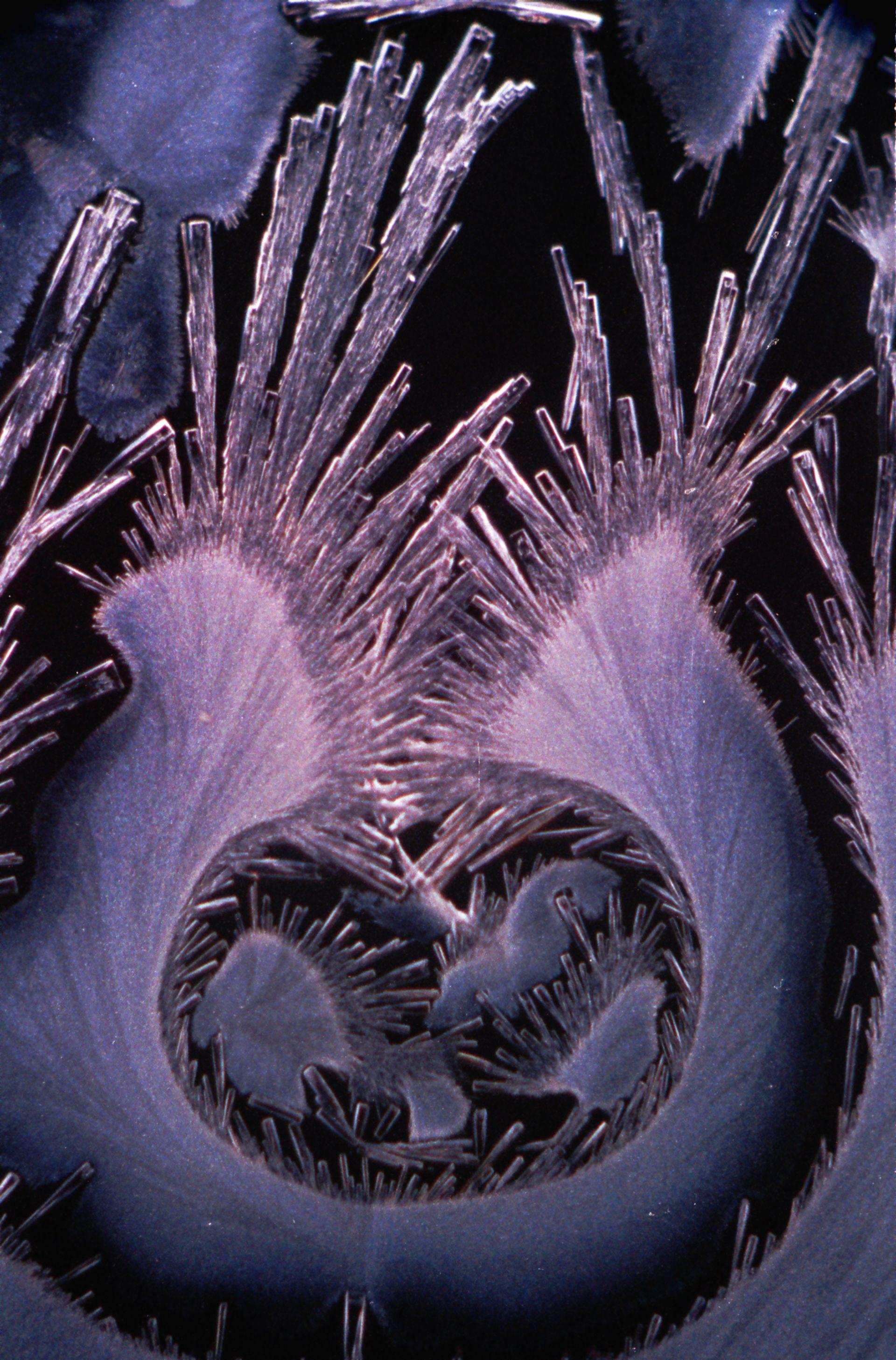 Carbaethopendezinium bromuro + Tiourea