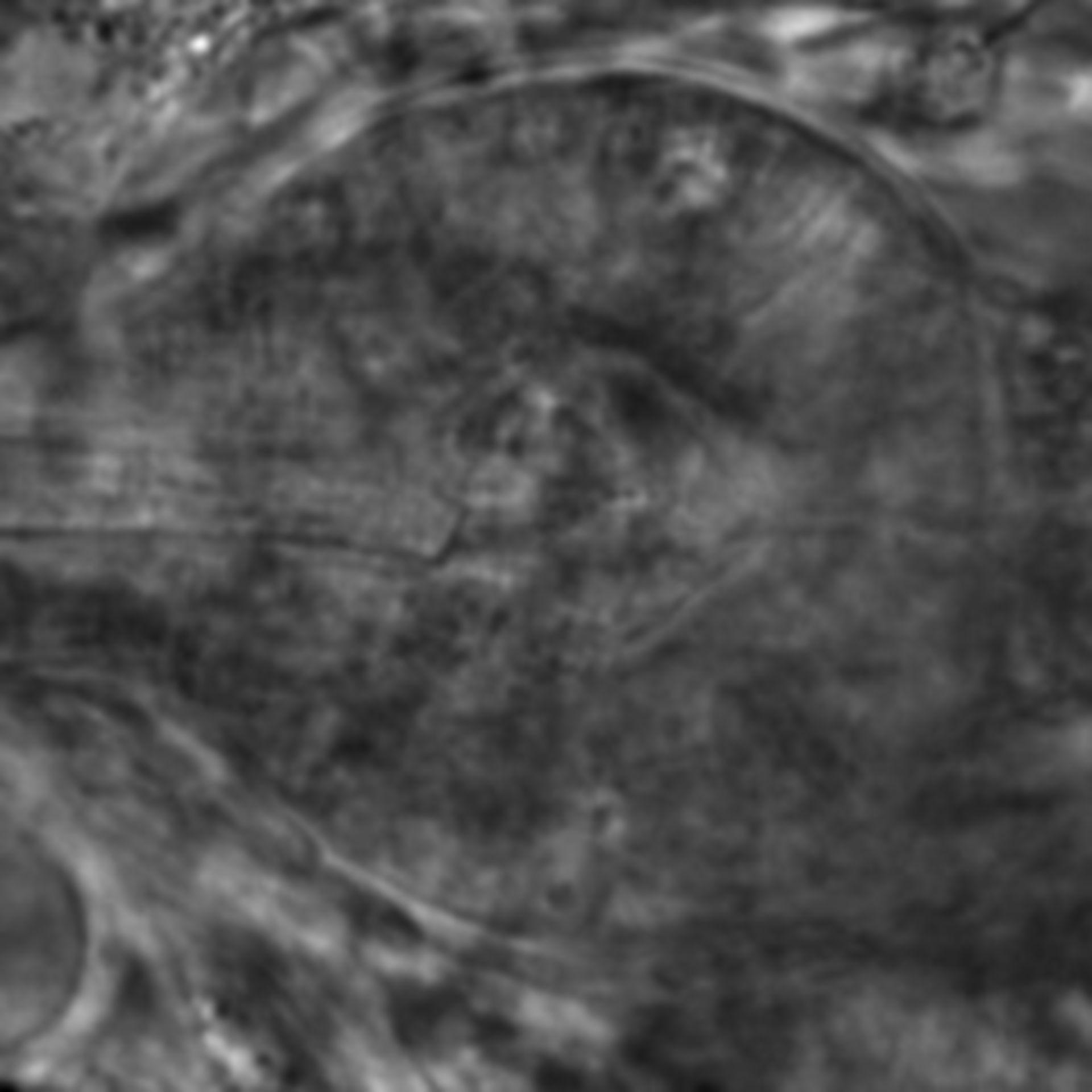 Caenorhabditis elegans - CIL:2668