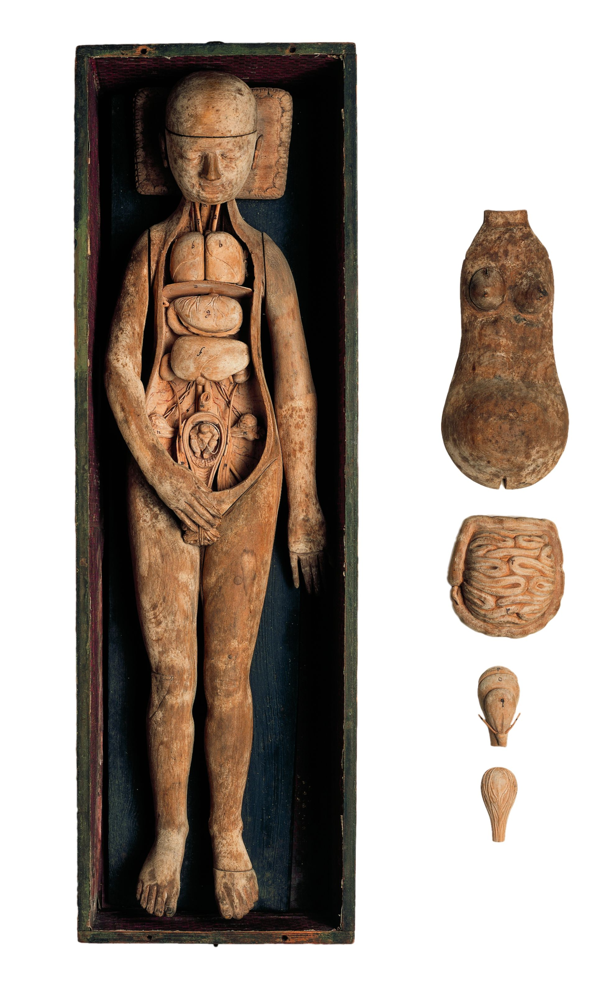 Model of a pregnant woman