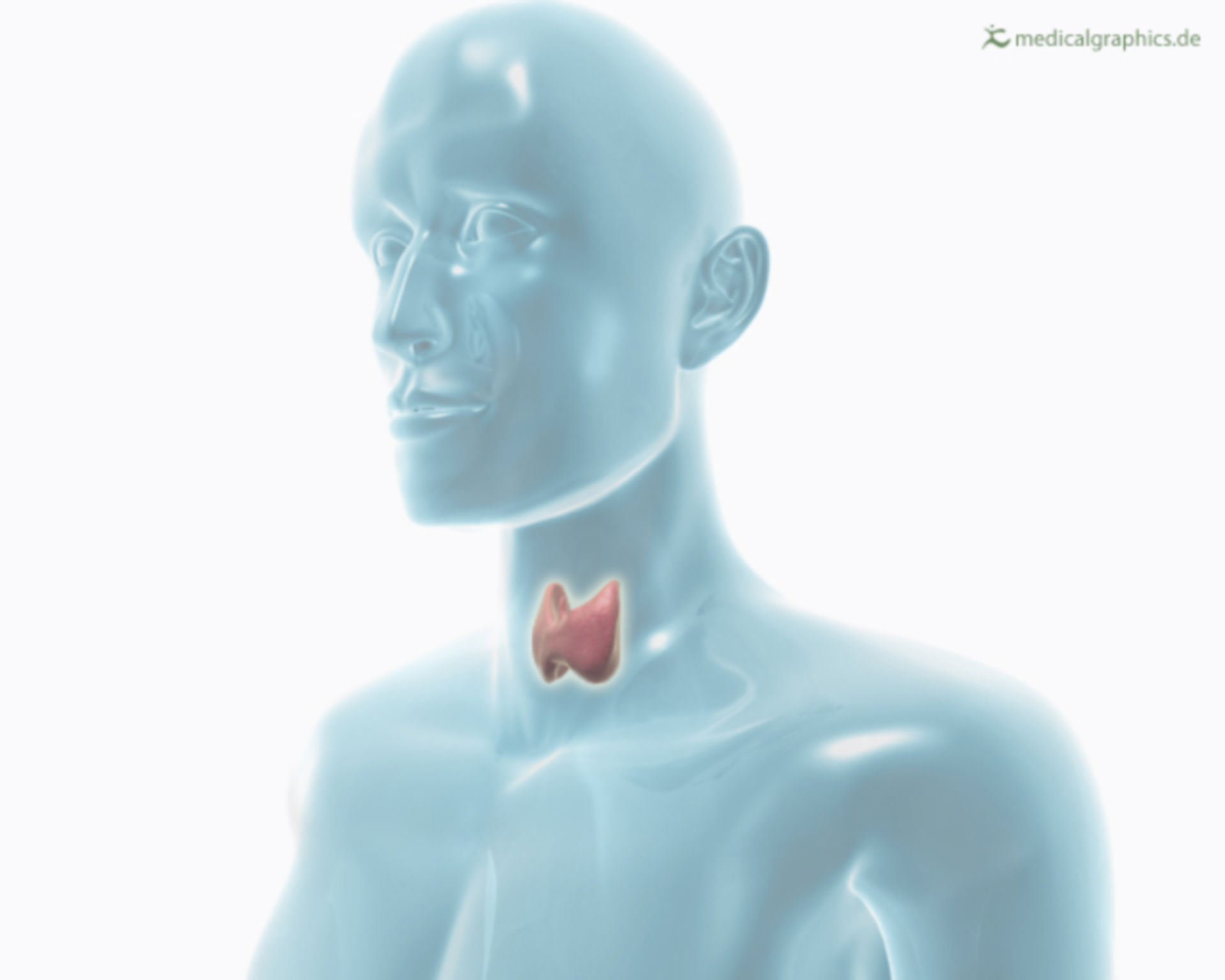 Transparent human with thyroid