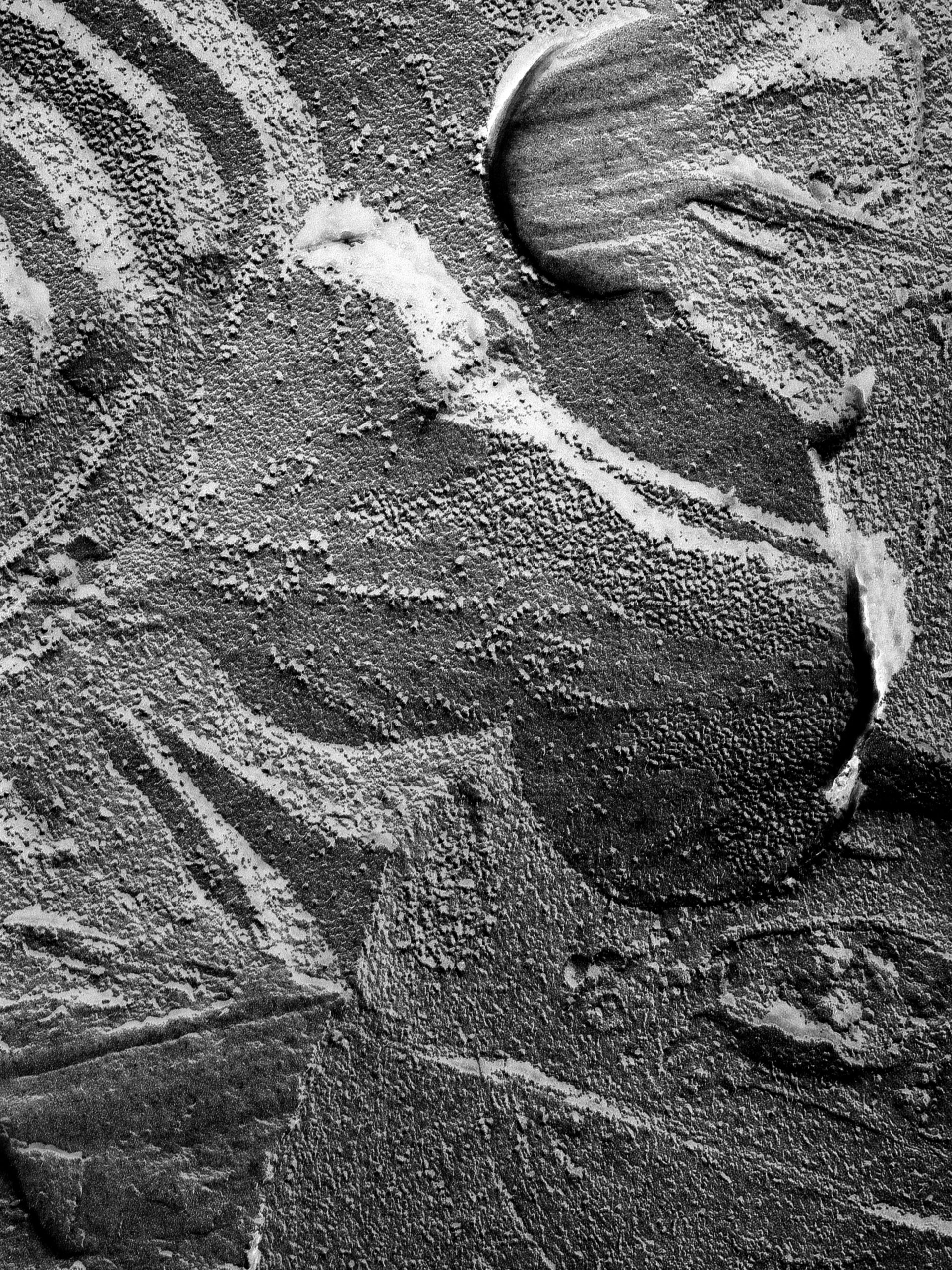 Oscillatoria tenuis (Thylakoid) - CIL:14696