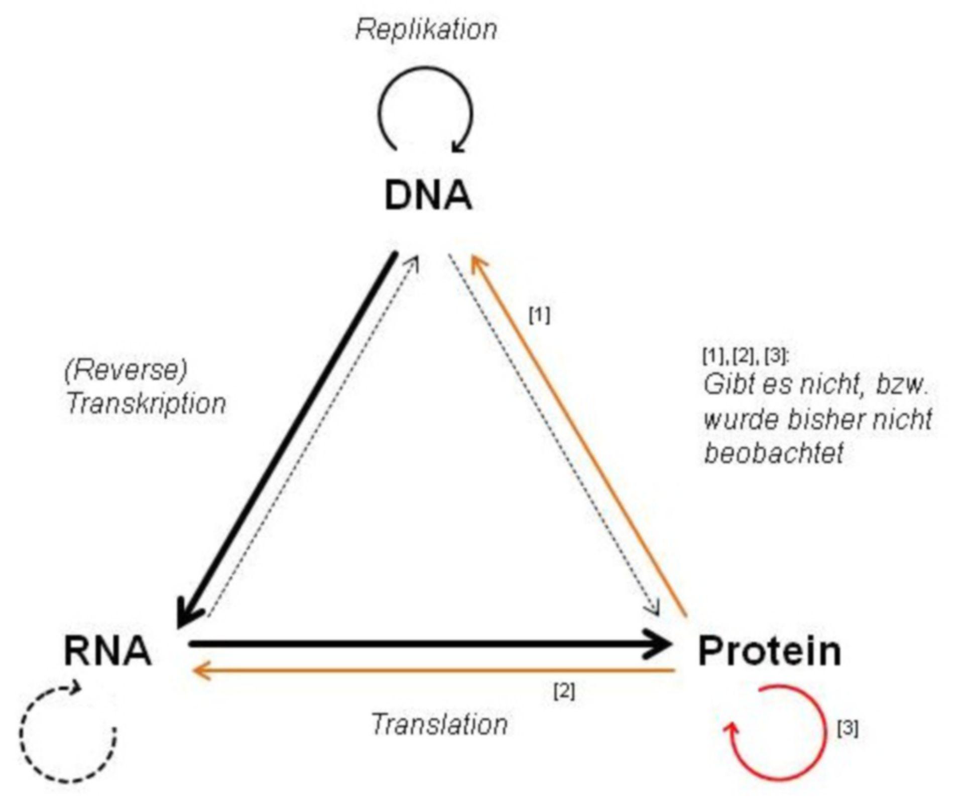 Zentrales Dogma der Molekularbiologie
