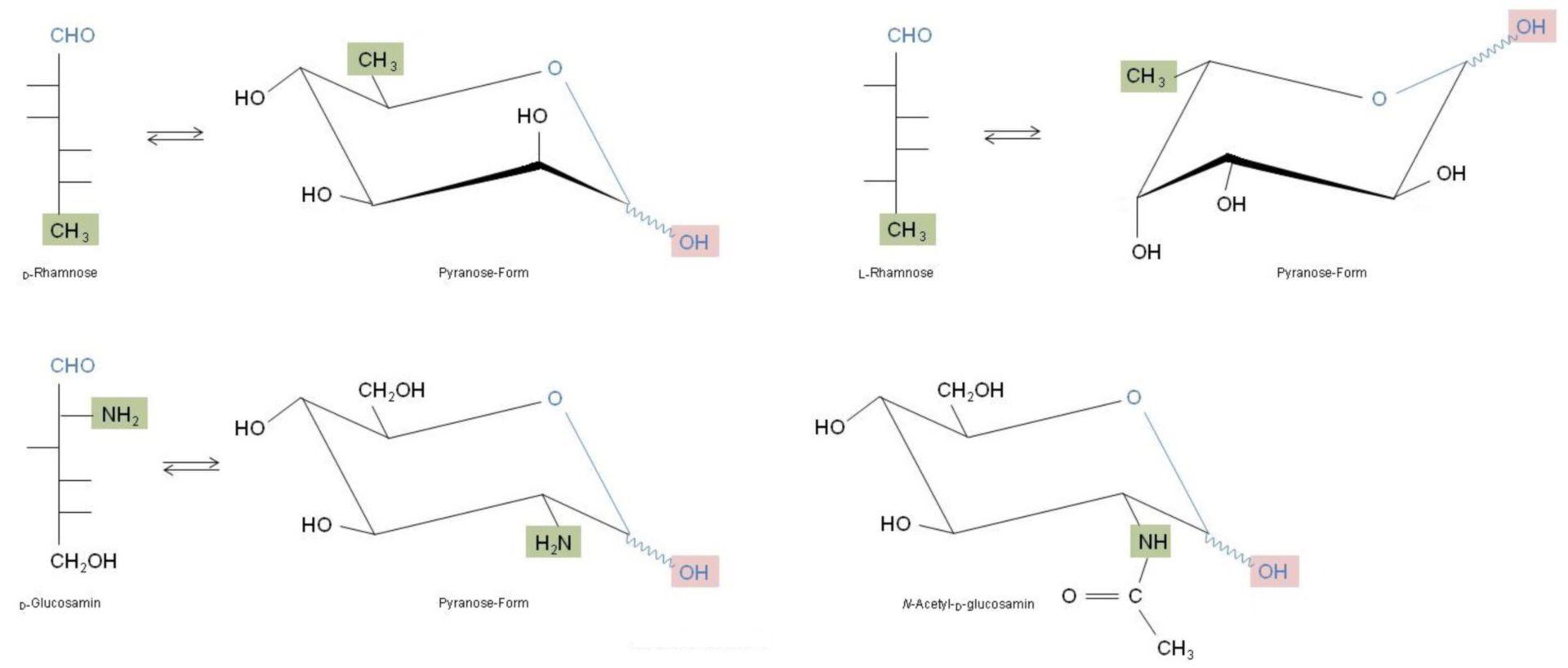 Wichtige Monosaccharide