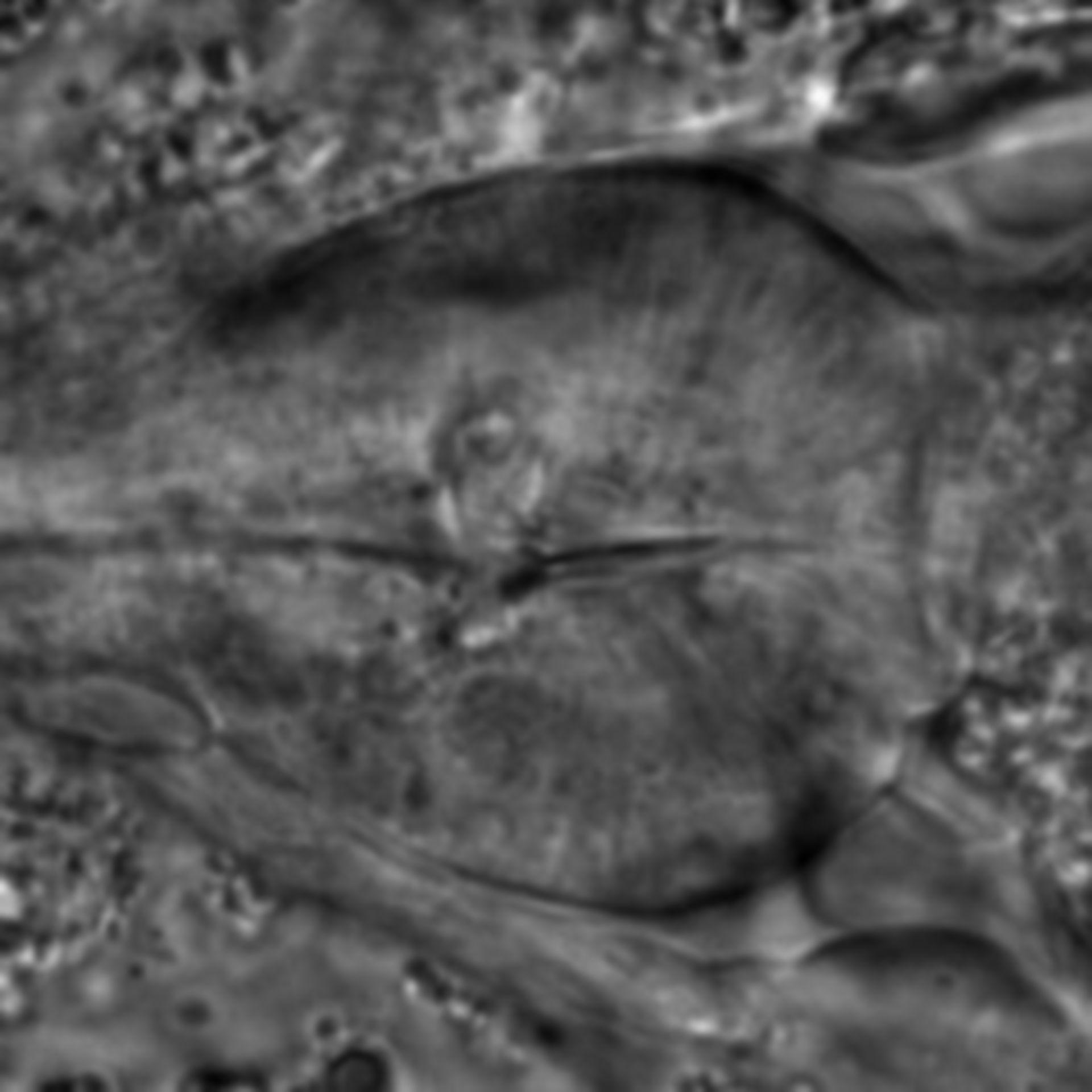Caenorhabditis elegans - CIL:1934