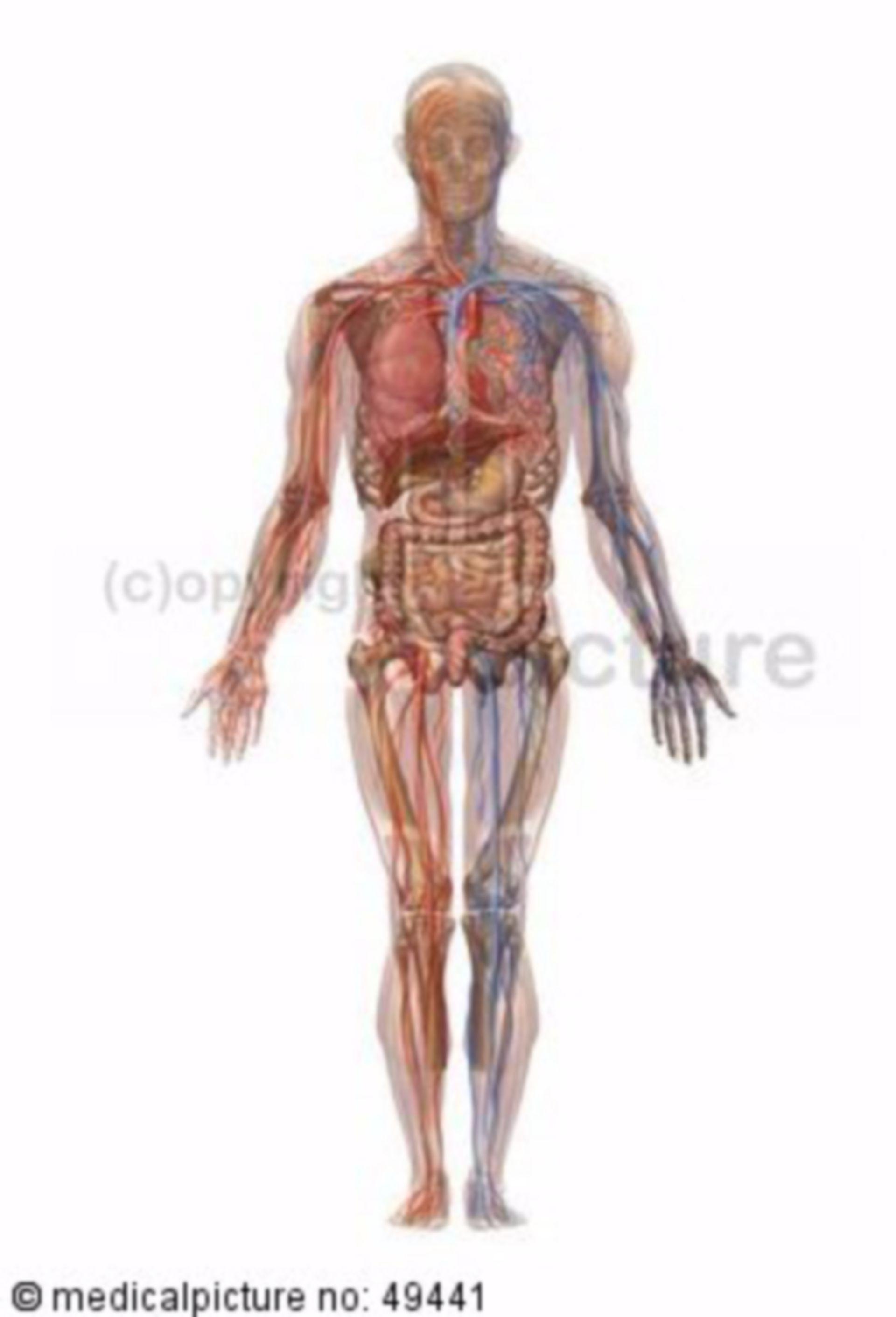 Der menschliche Körper