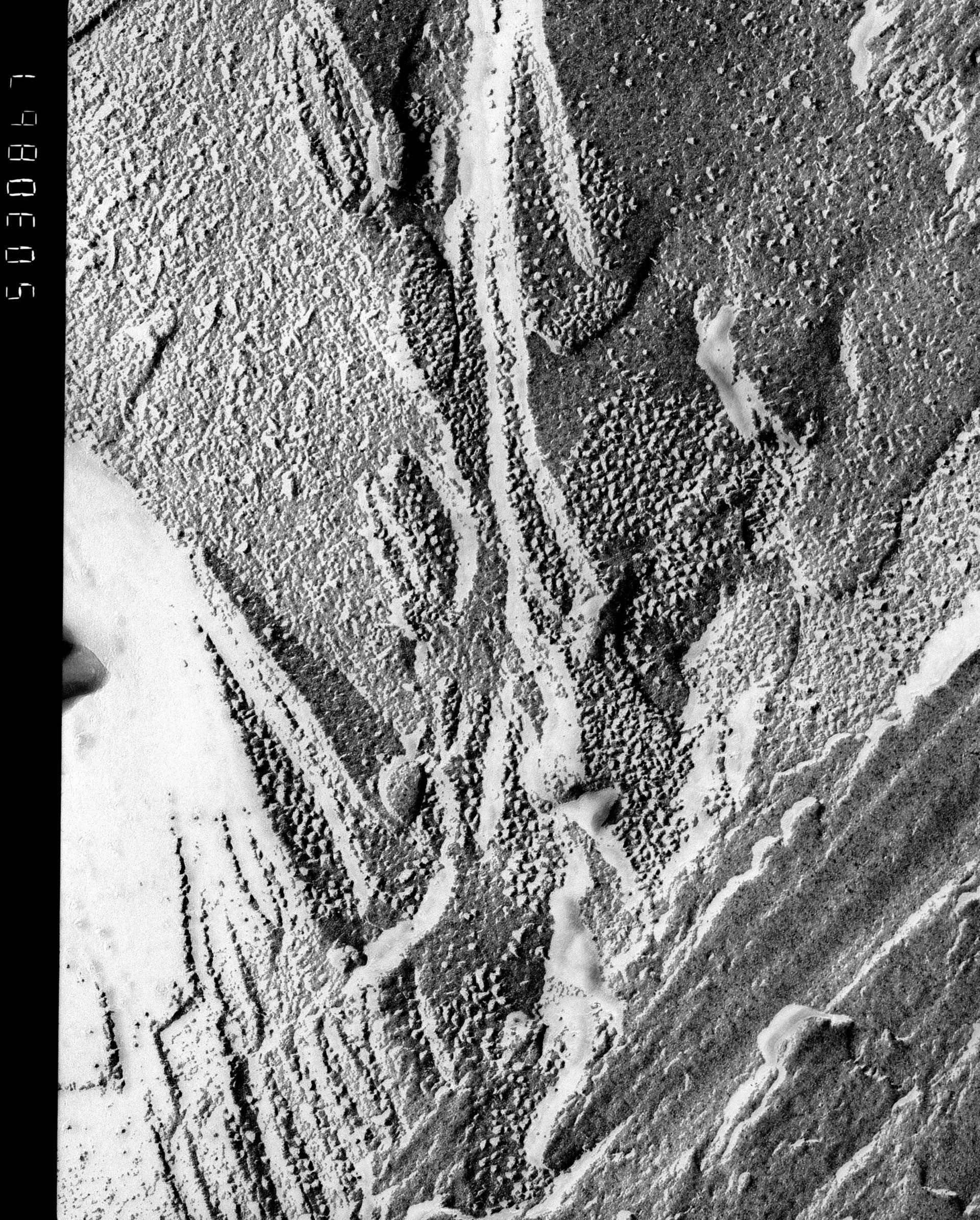 Prochloron (Thylakoid) - CIL:14000