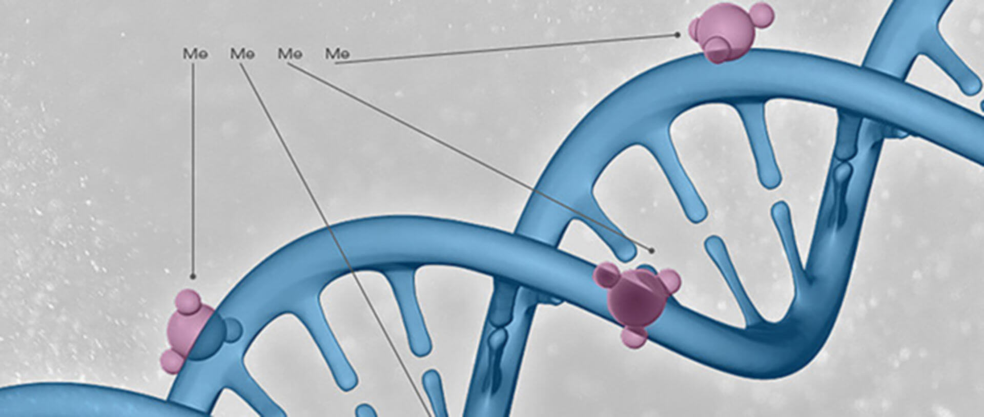 DNA modification enzymes