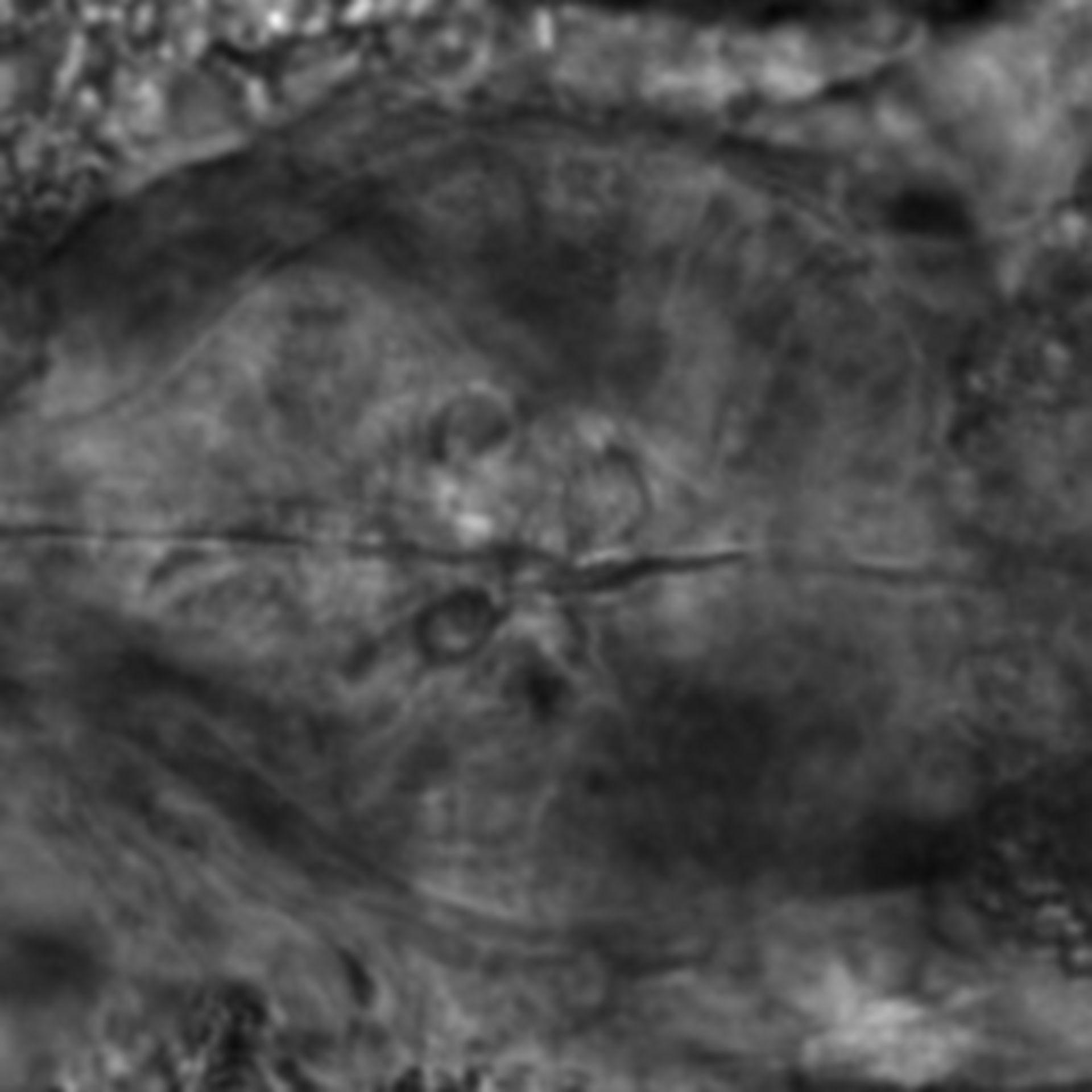 Caenorhabditis elegans - CIL:2287
