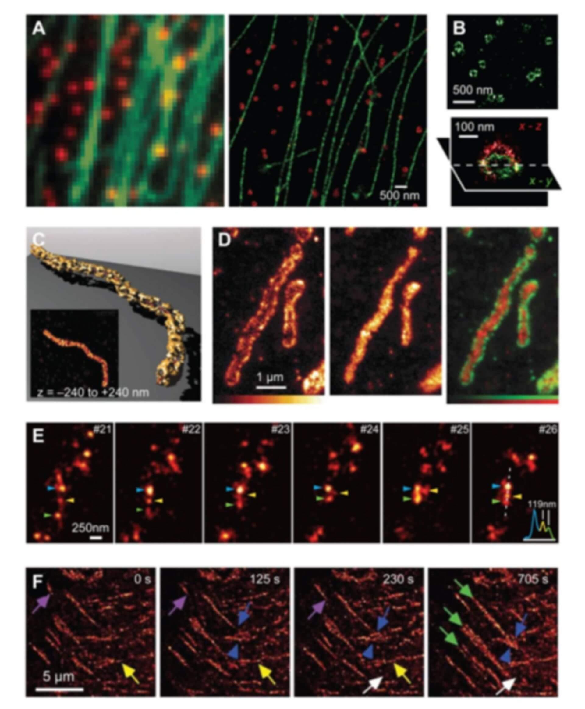 Super-Resolution Microscopy Service