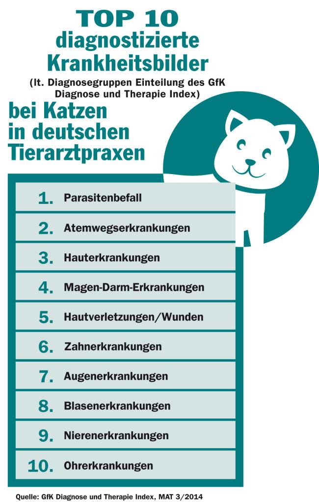 Top 10 Krankheiten der Katze