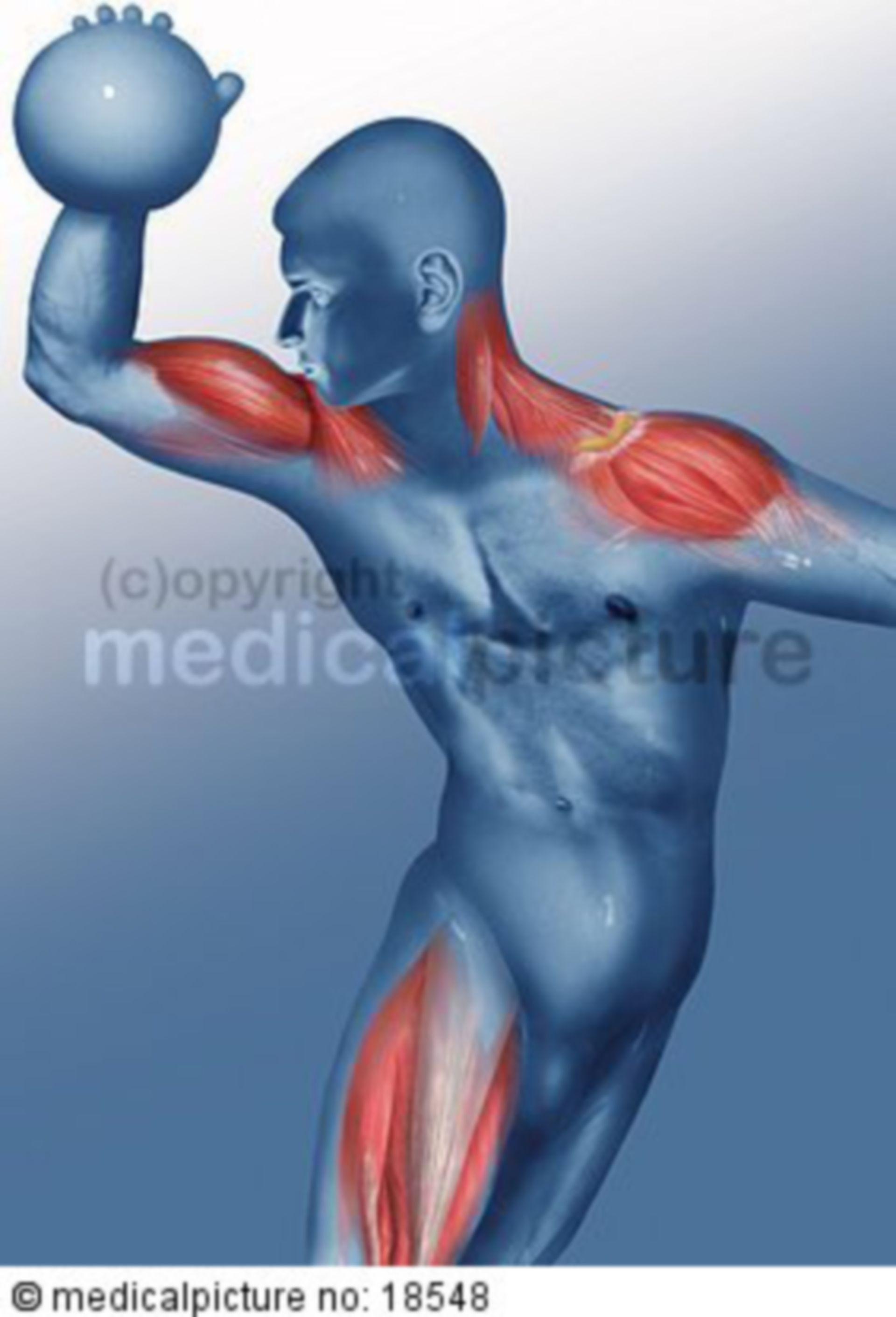 Muscles used playing handball