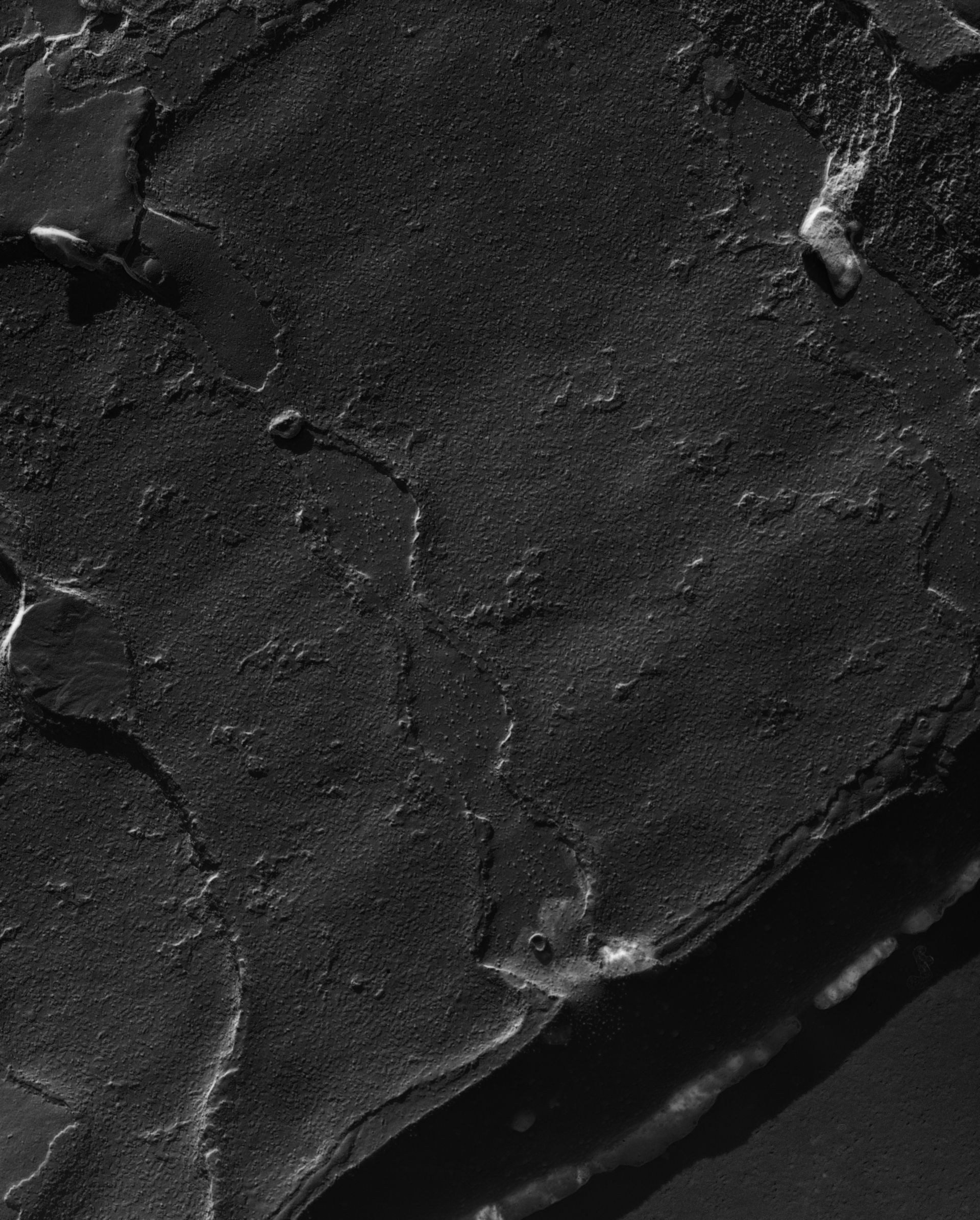 Damselfly (Sarcoplasmic reticulum) - CIL:18470