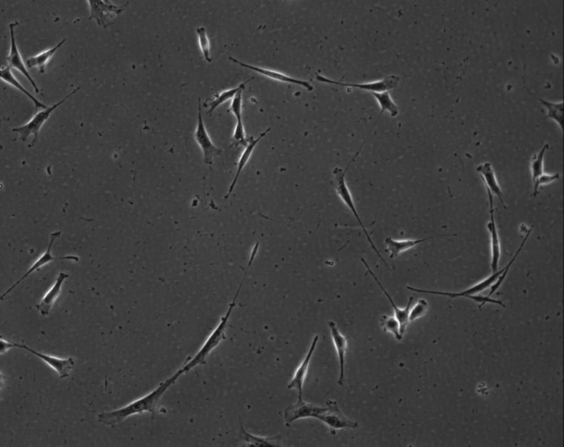 Mus musculus (Extracellular matrix part) - CIL:8953