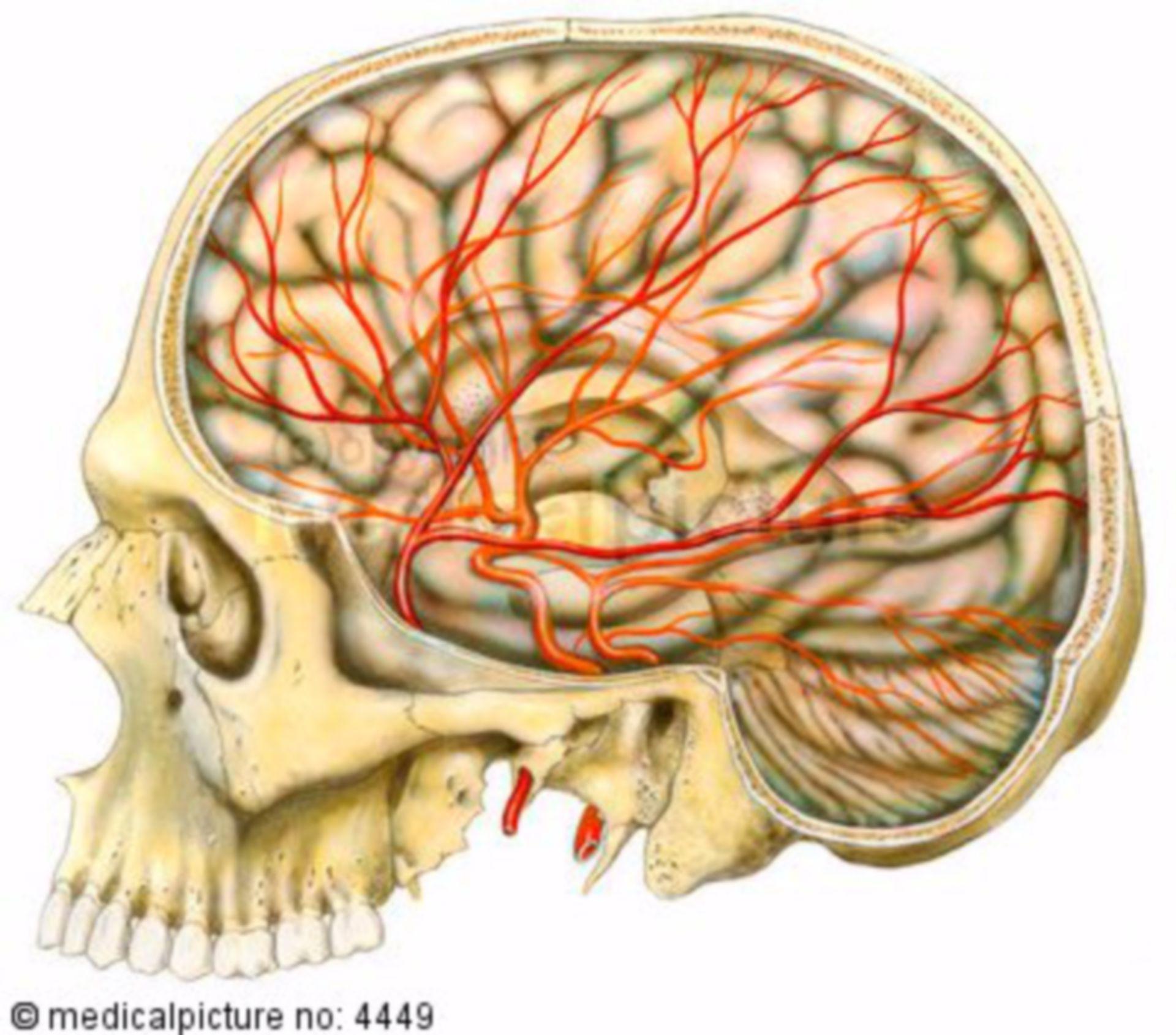 Arterial blood supply - brain