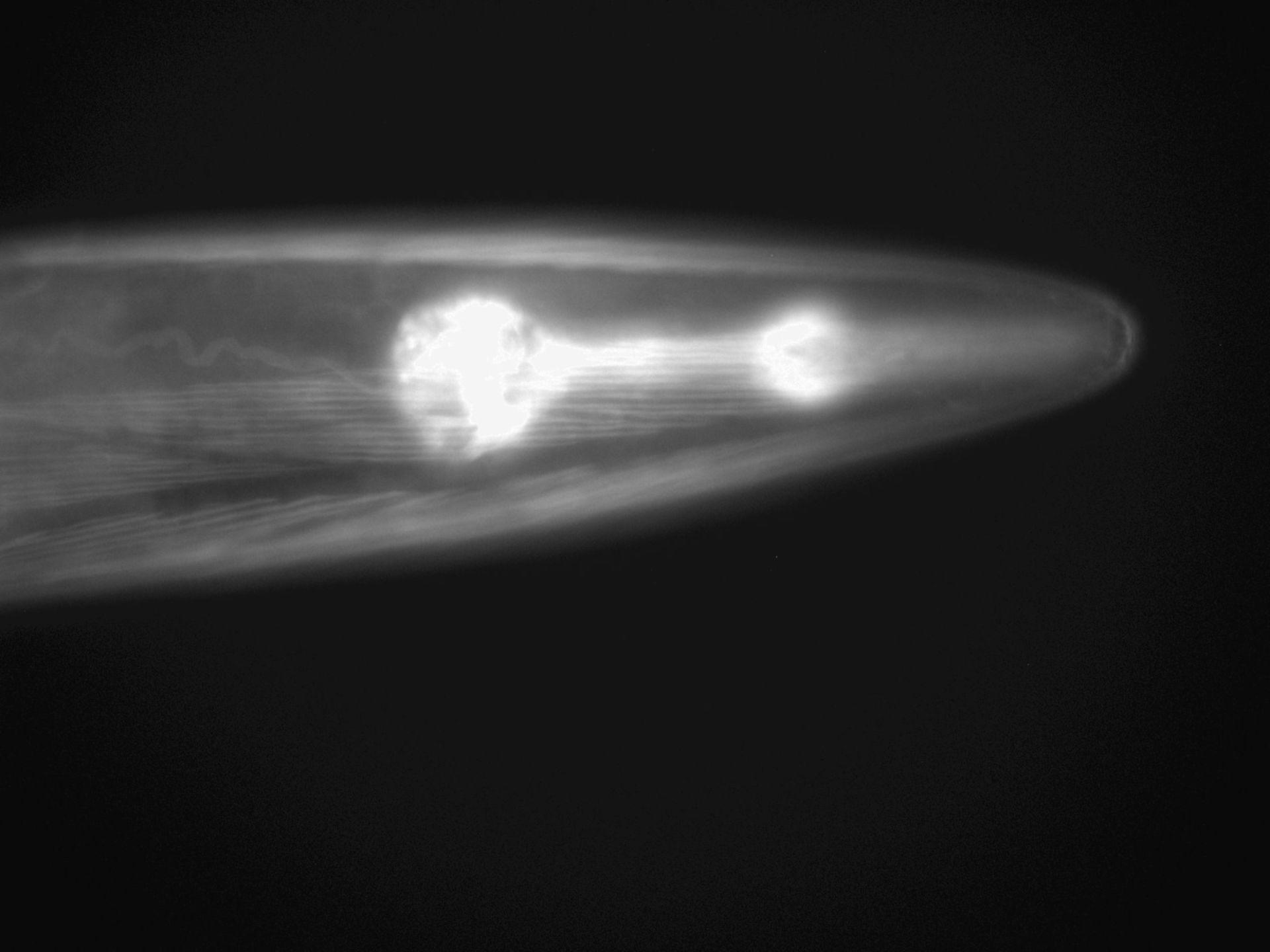 Caenorhabditis elegans (filamento di actina) - CIL:1301