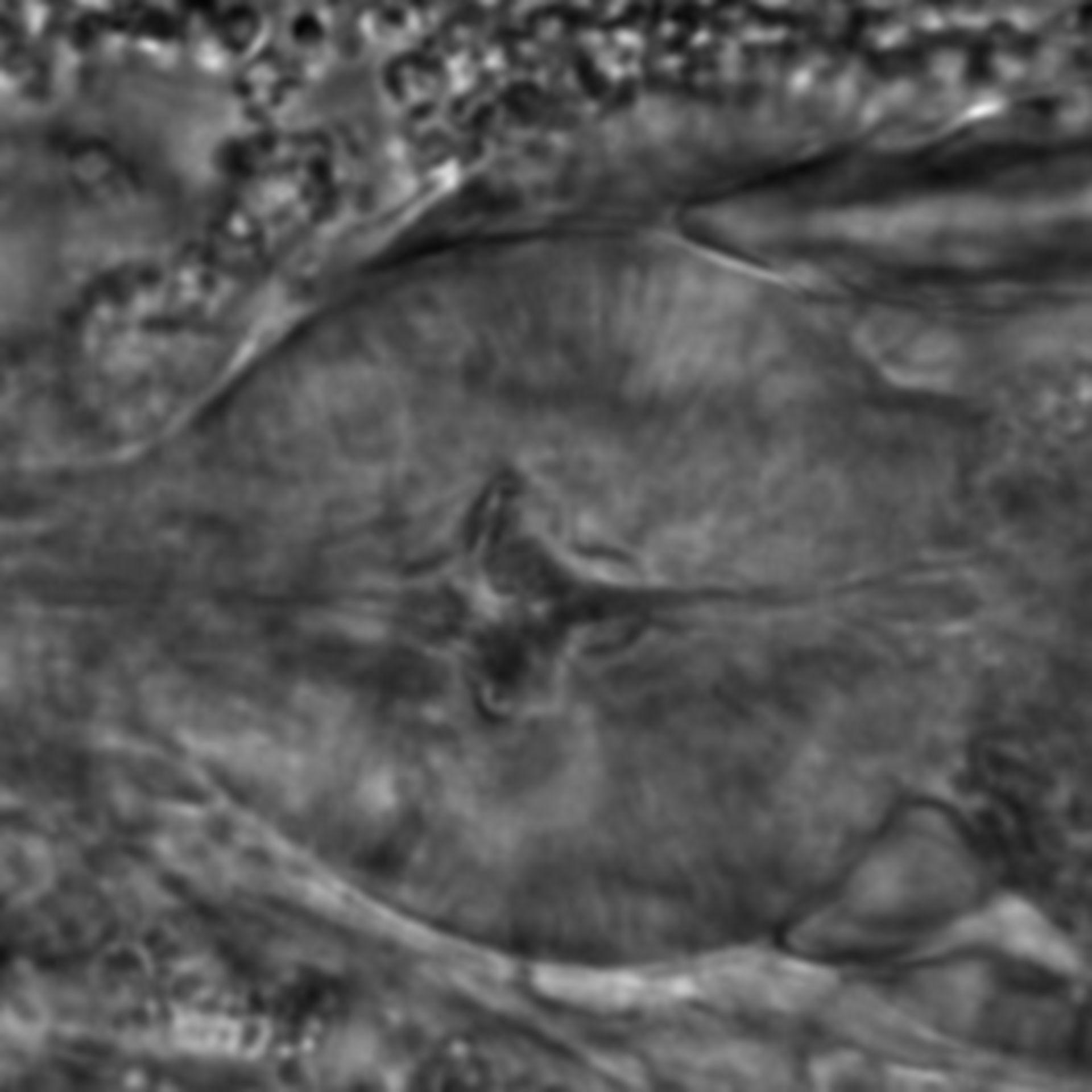 Caenorhabditis elegans - CIL:2286