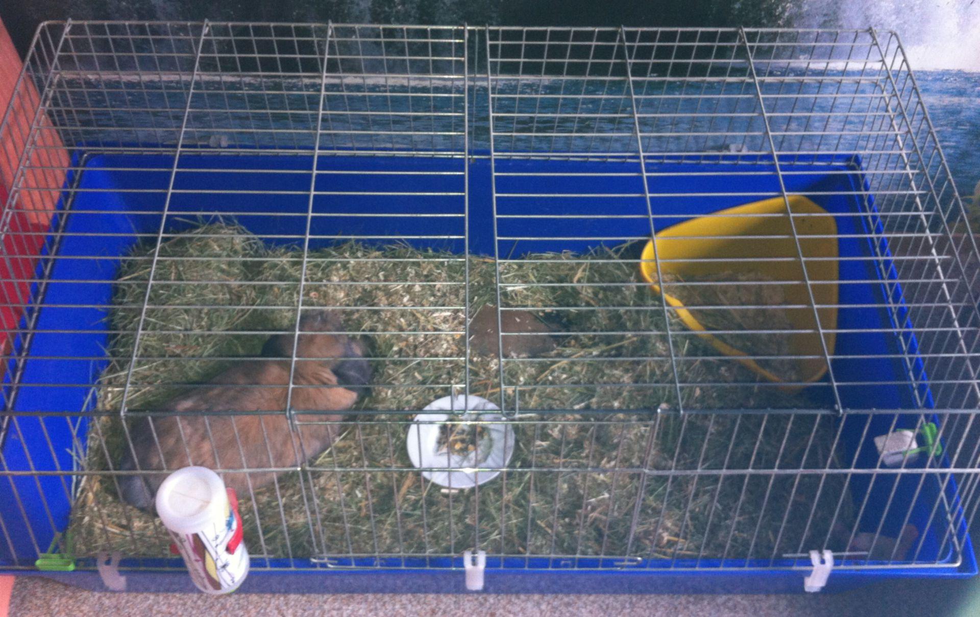 Käfighaltung - Kaninchen