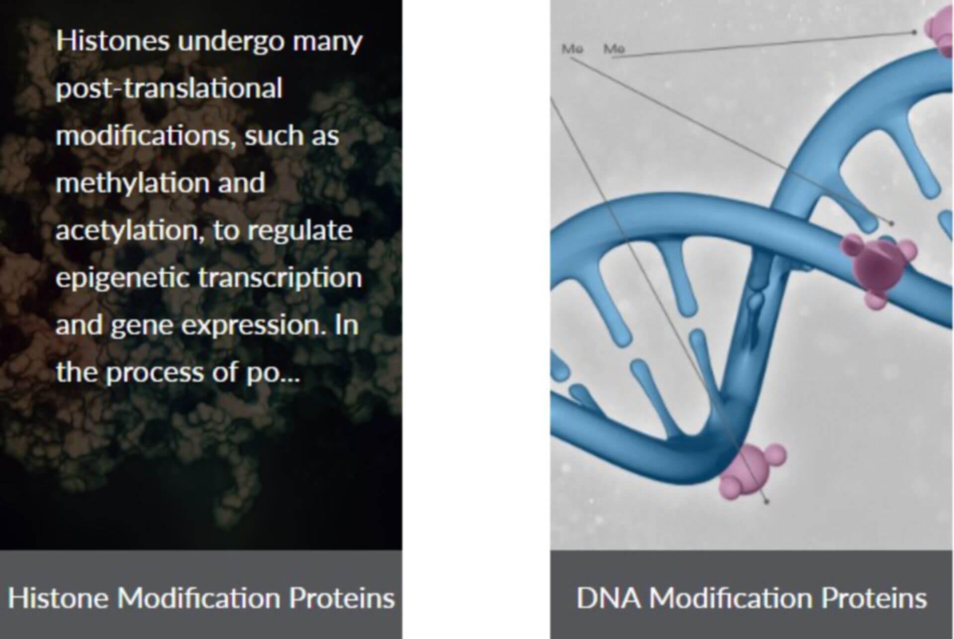 recombinant protein epigenetics