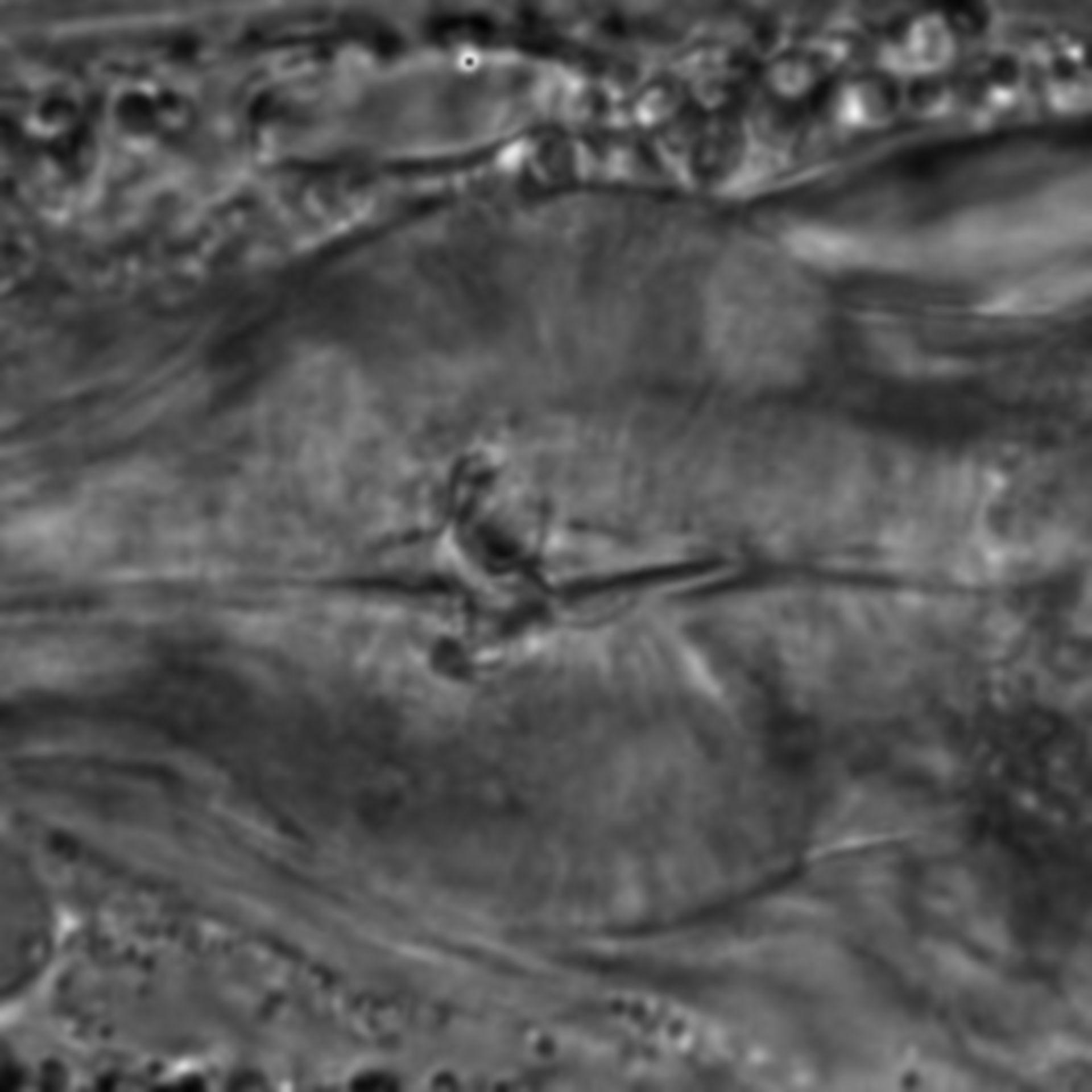 Caenorhabditis elegans - CIL:1788