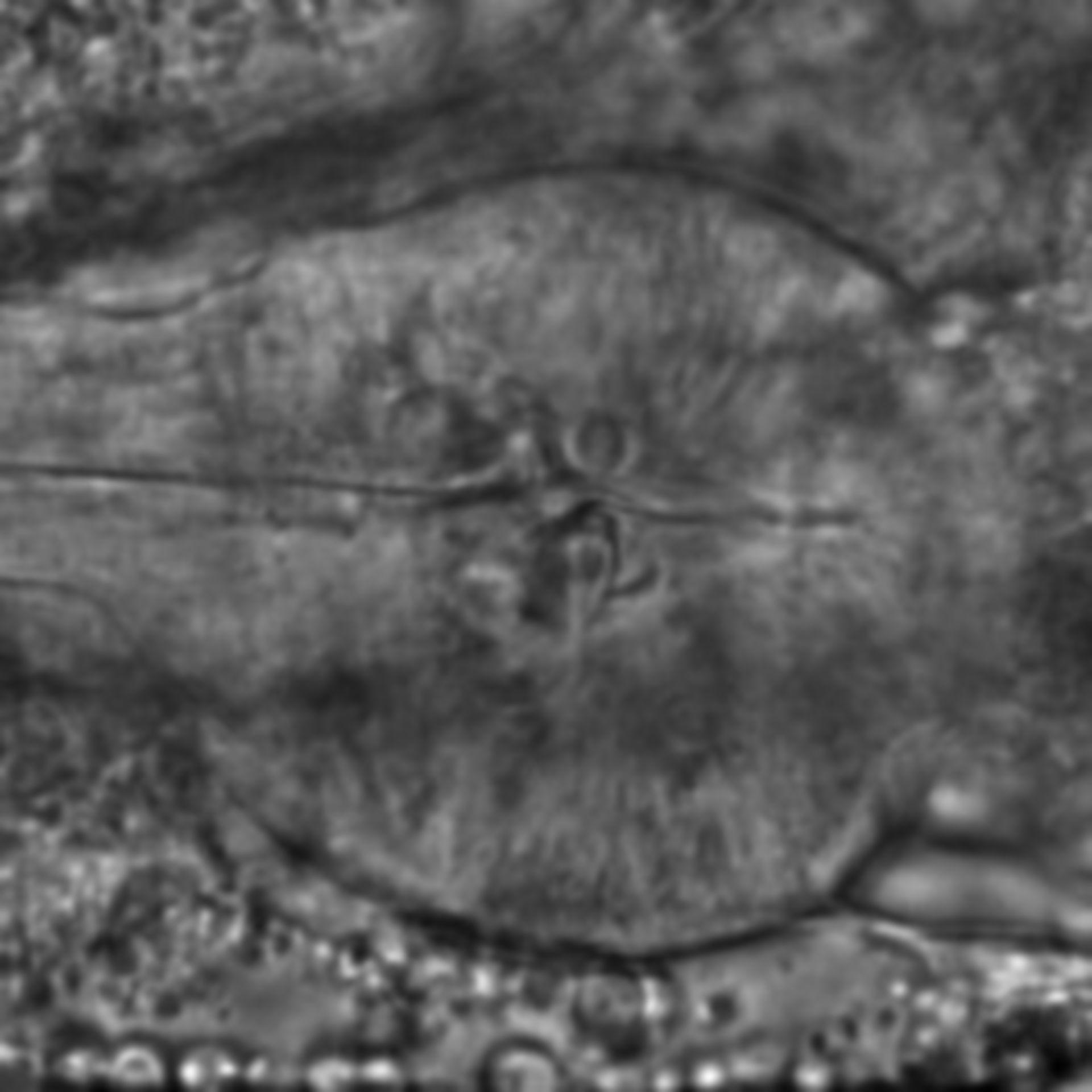 Caenorhabditis elegans - CIL:2169