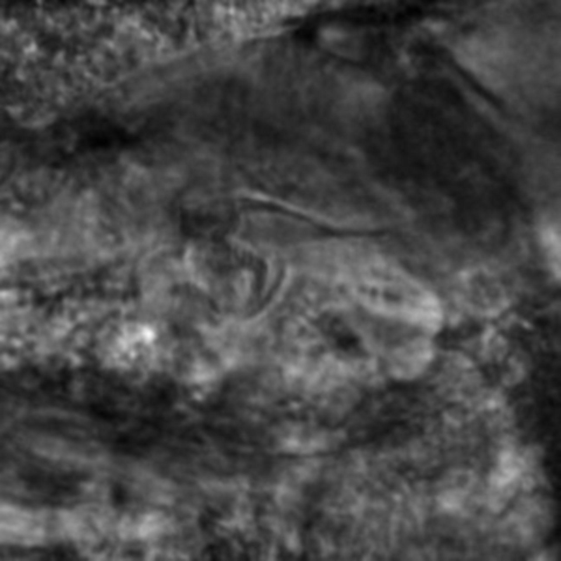 Caenorhabditis elegans - CIL:2807