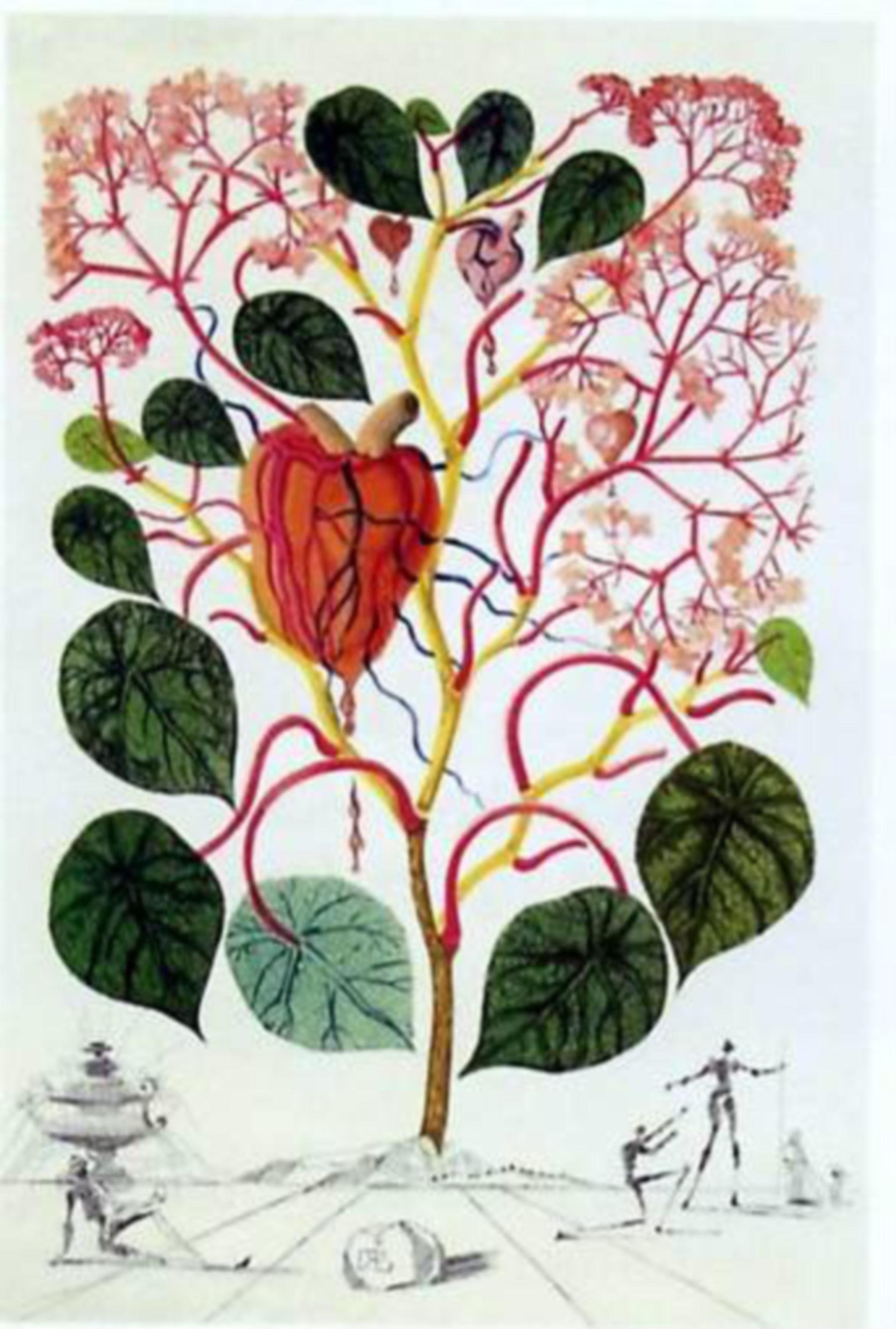 Anacardium recordans