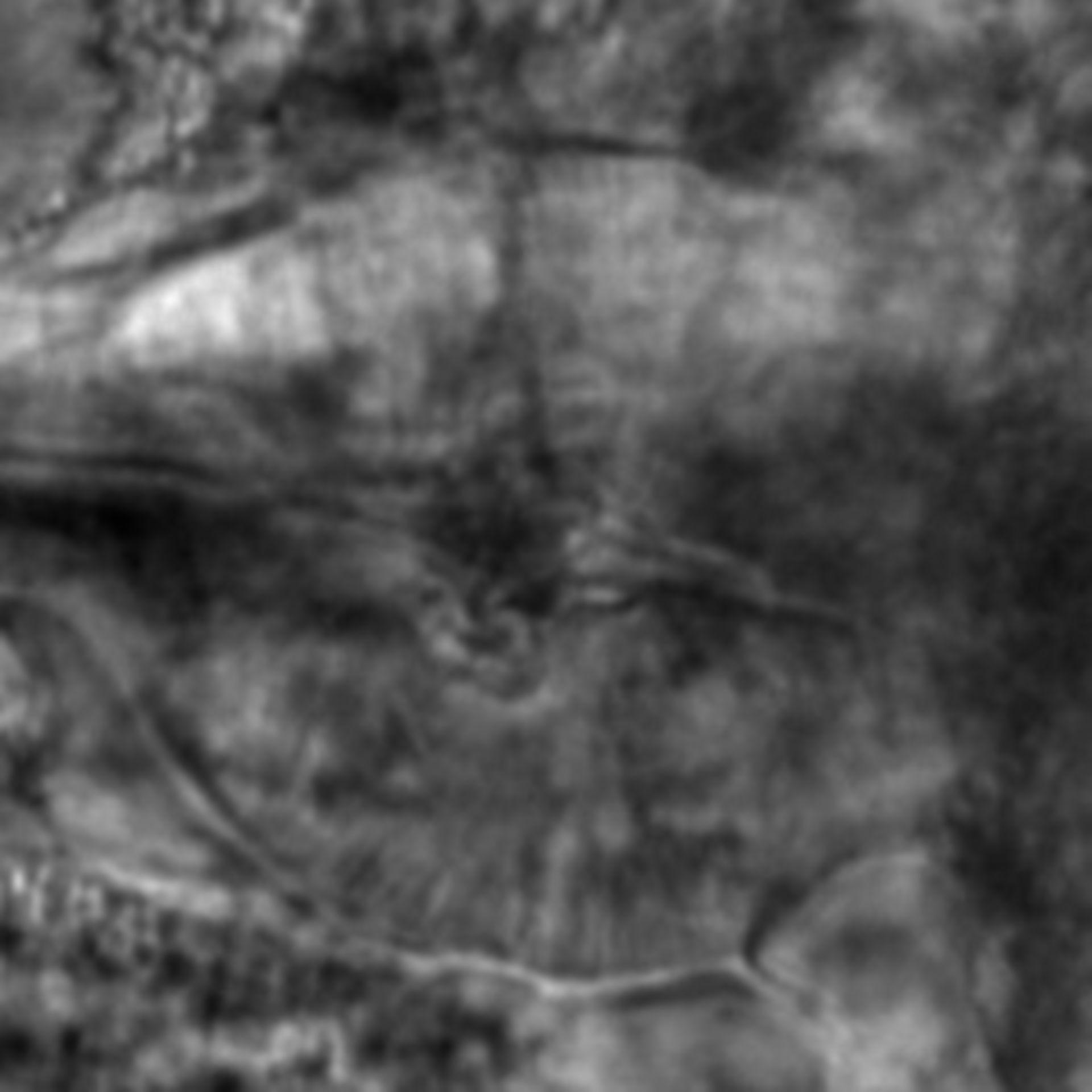 Caenorhabditis elegans - CIL:1920