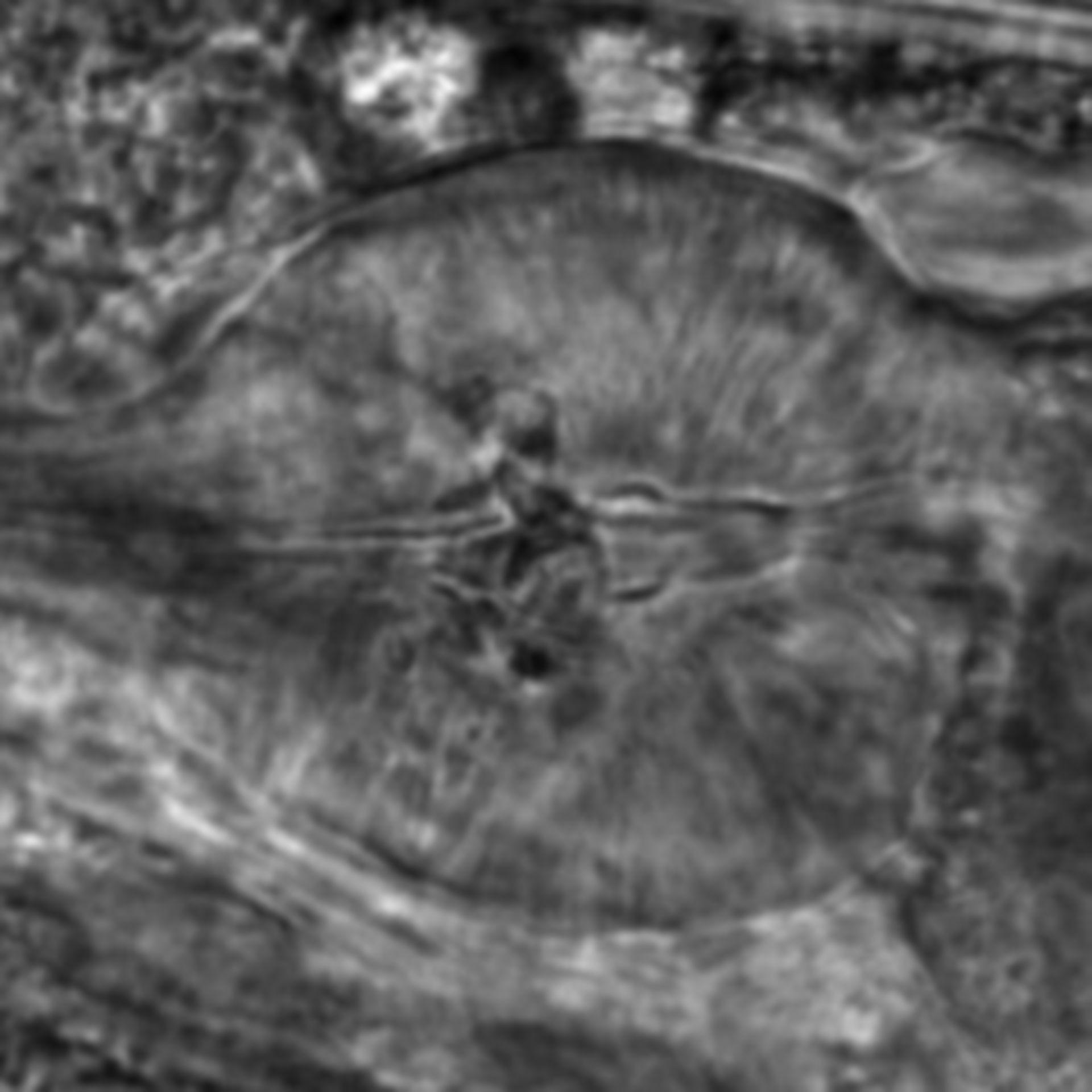Caenorhabditis elegans - CIL:2187