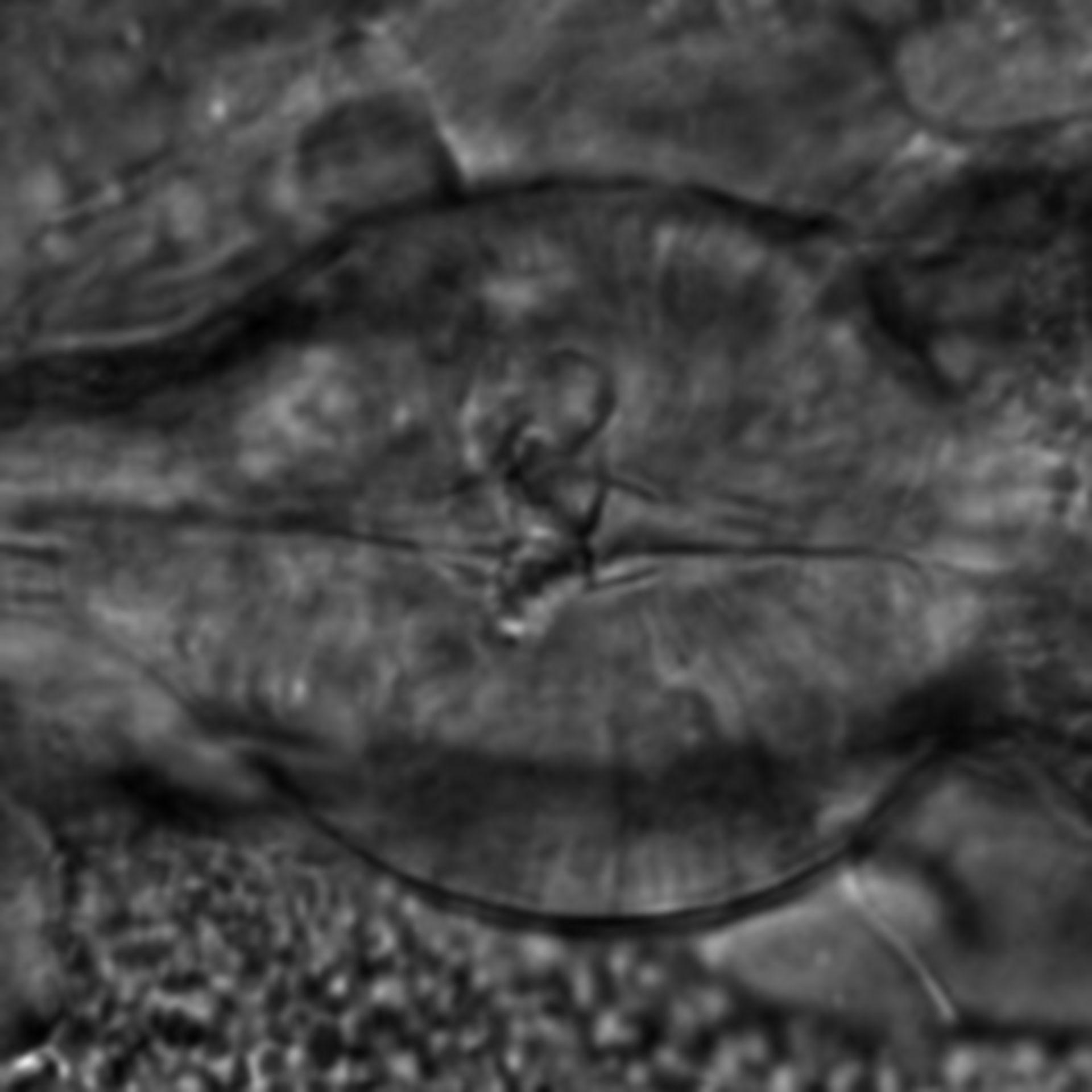 Caenorhabditis elegans - CIL:2188