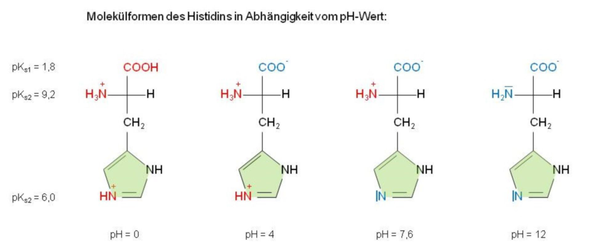 Forme molecola di istidina