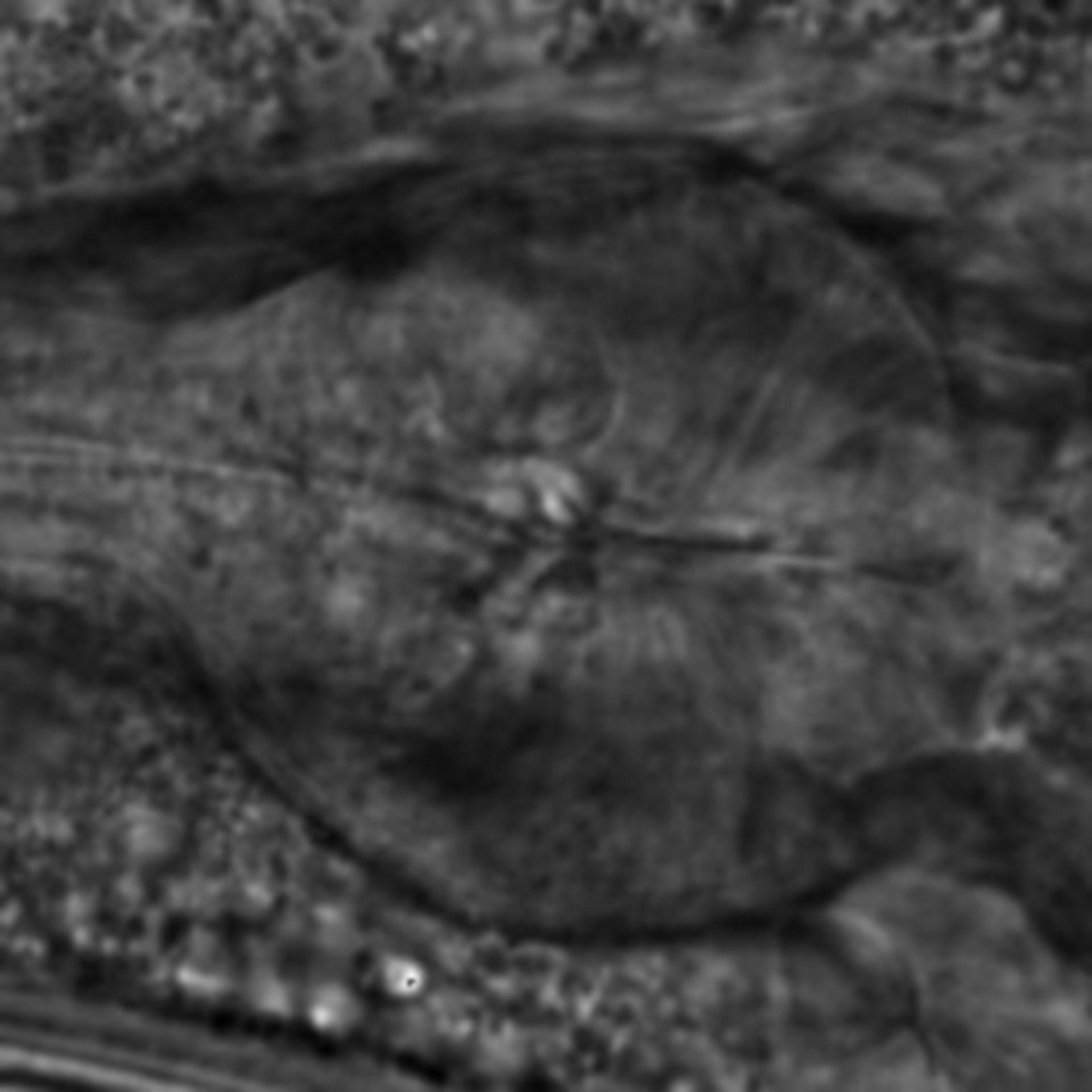 Caenorhabditis elegans - CIL:2172