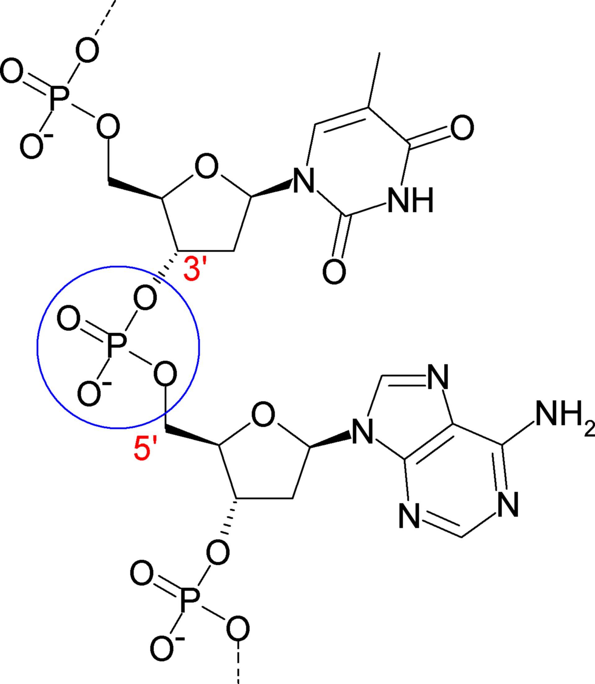 Phosphodiesterbindung