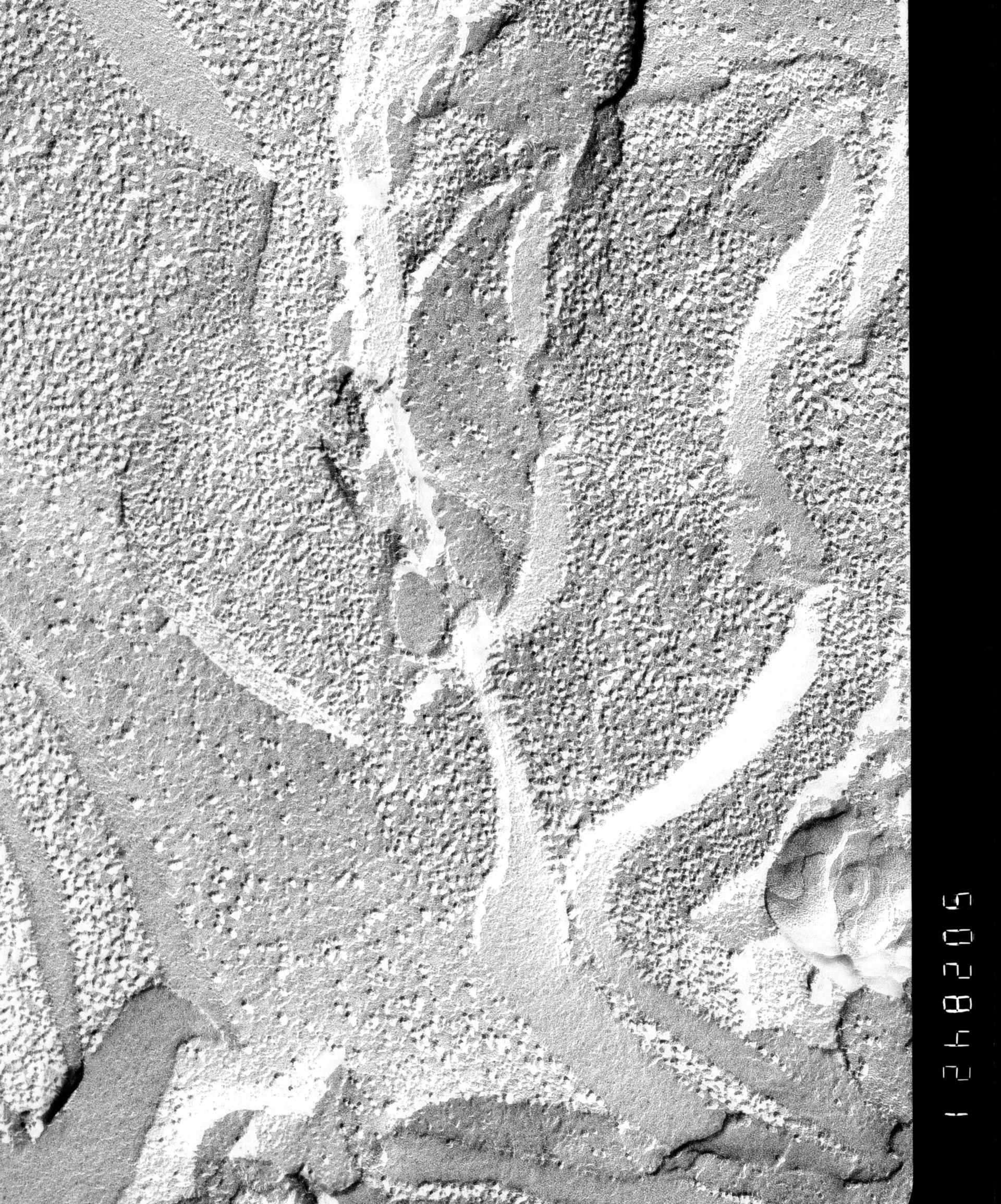 Prochloron (Thylakoid) - CIL:16228