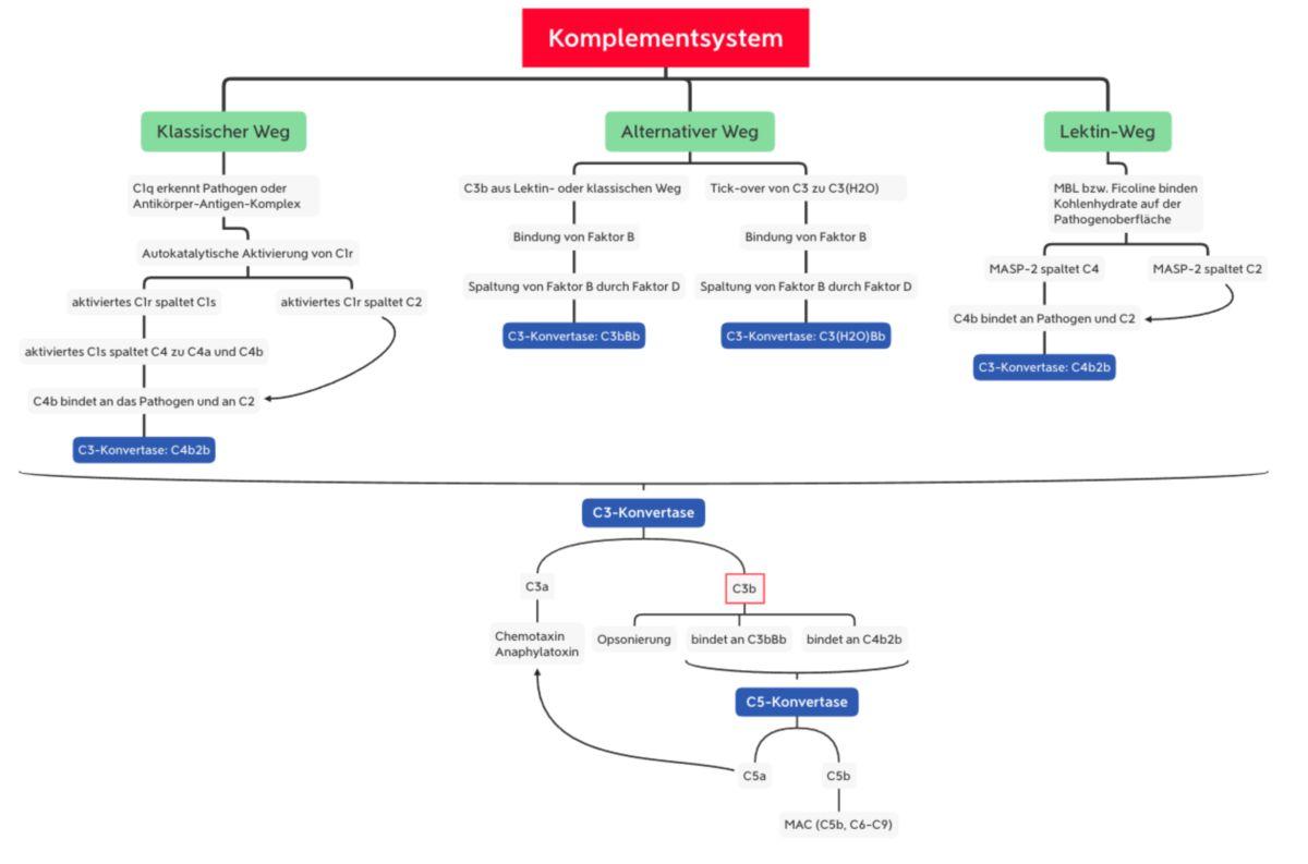 Komplementsystem