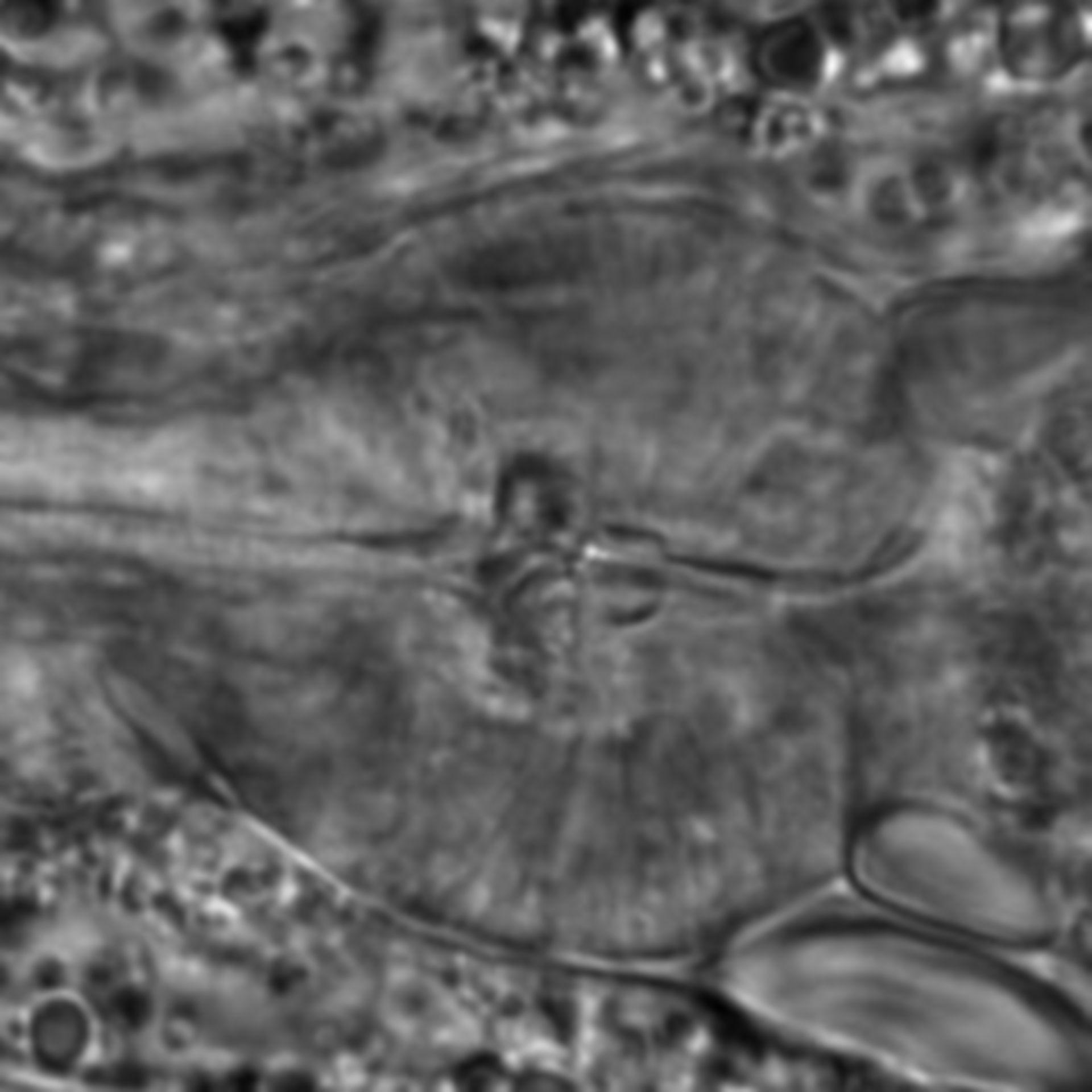 Caenorhabditis elegans - CIL:2055